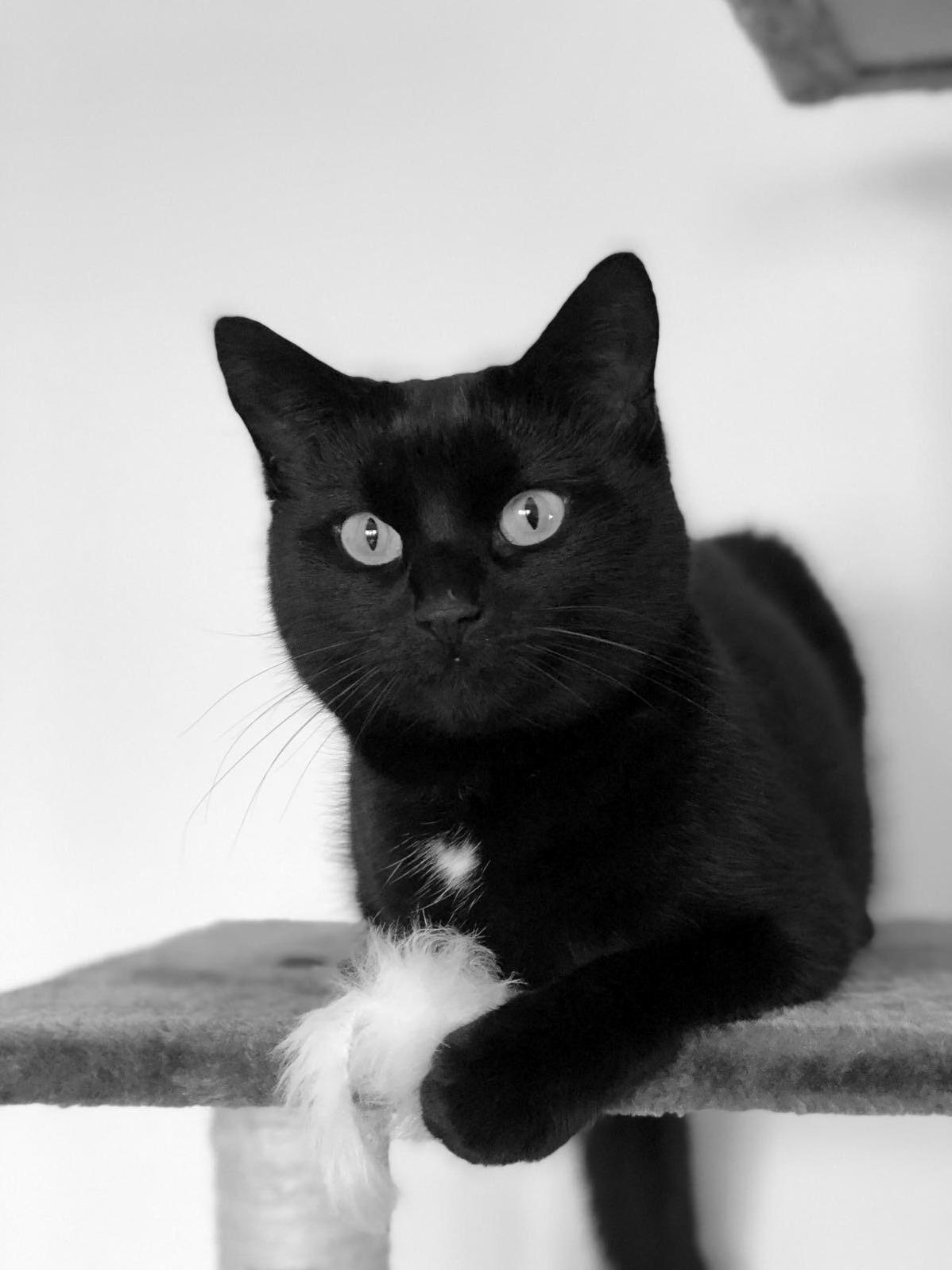 Pretty sure my cat thinks she is a model…