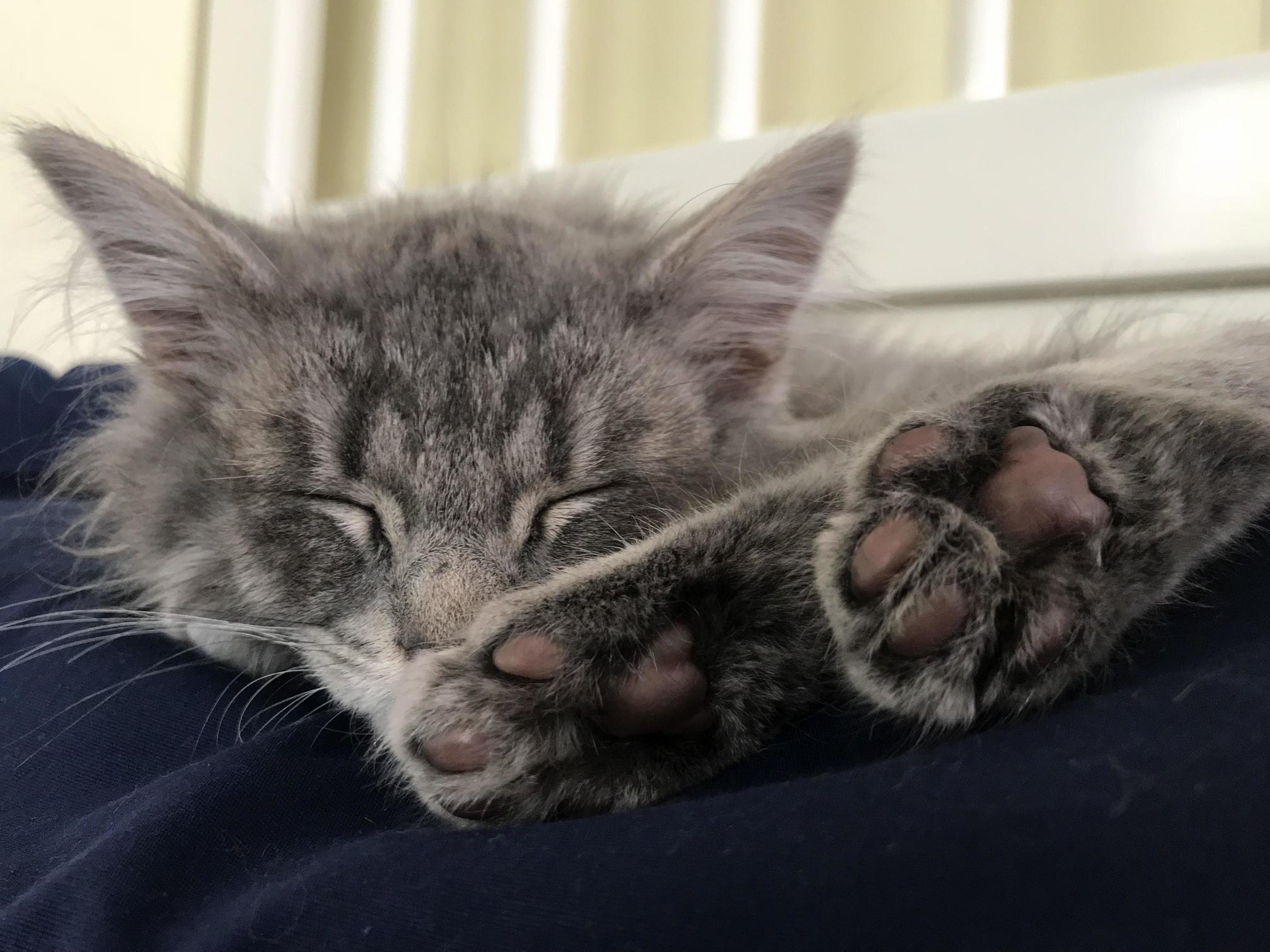 So in love with xenas 10 week old toe beans