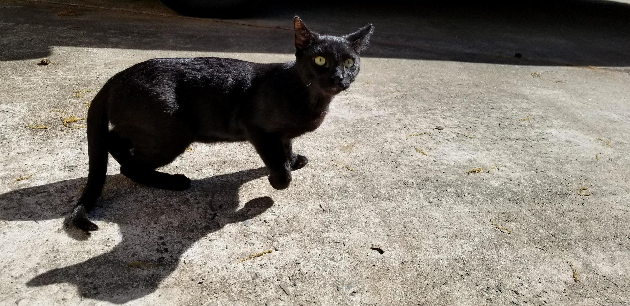 That cat shadow