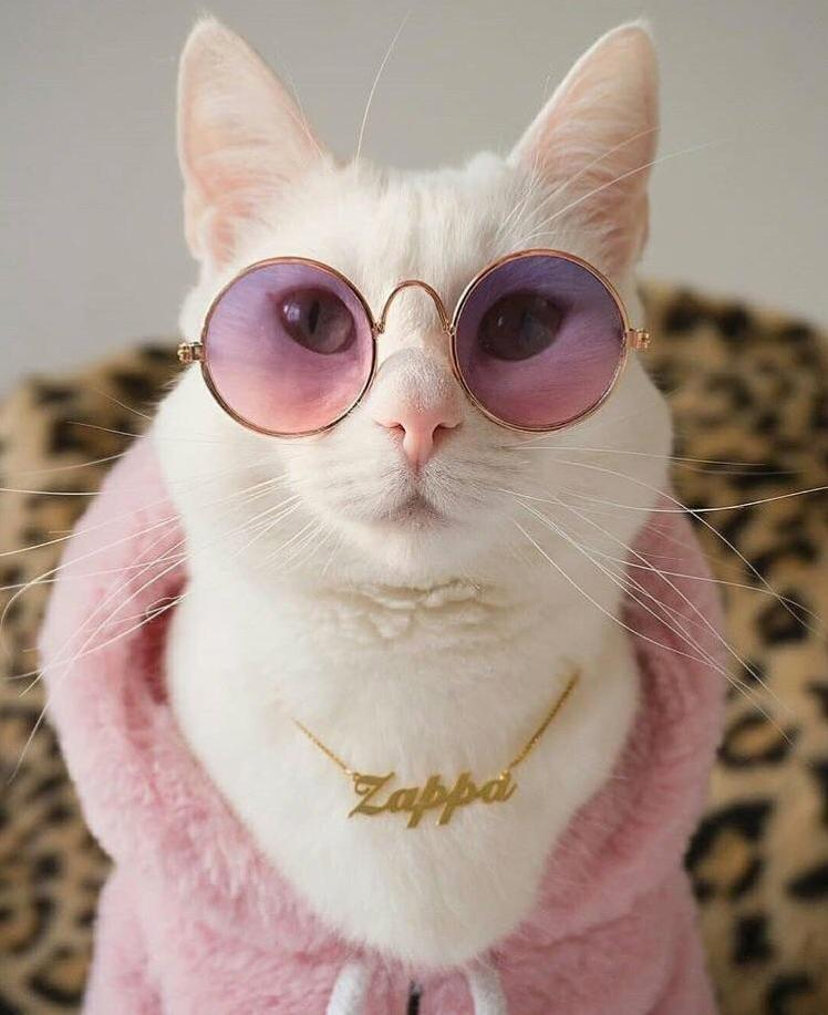 This cat has more style than i do 