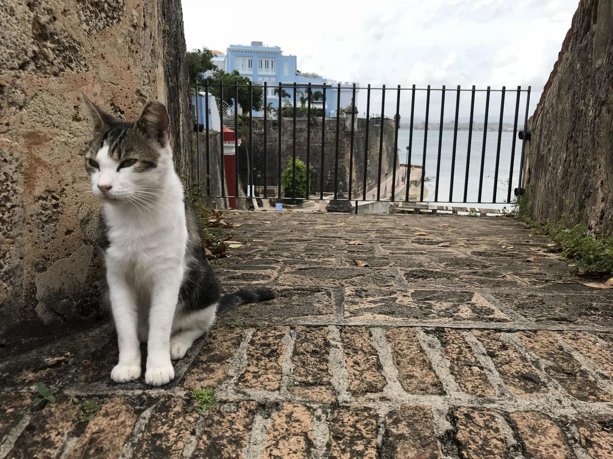 Visiting old san juan and made a new friend