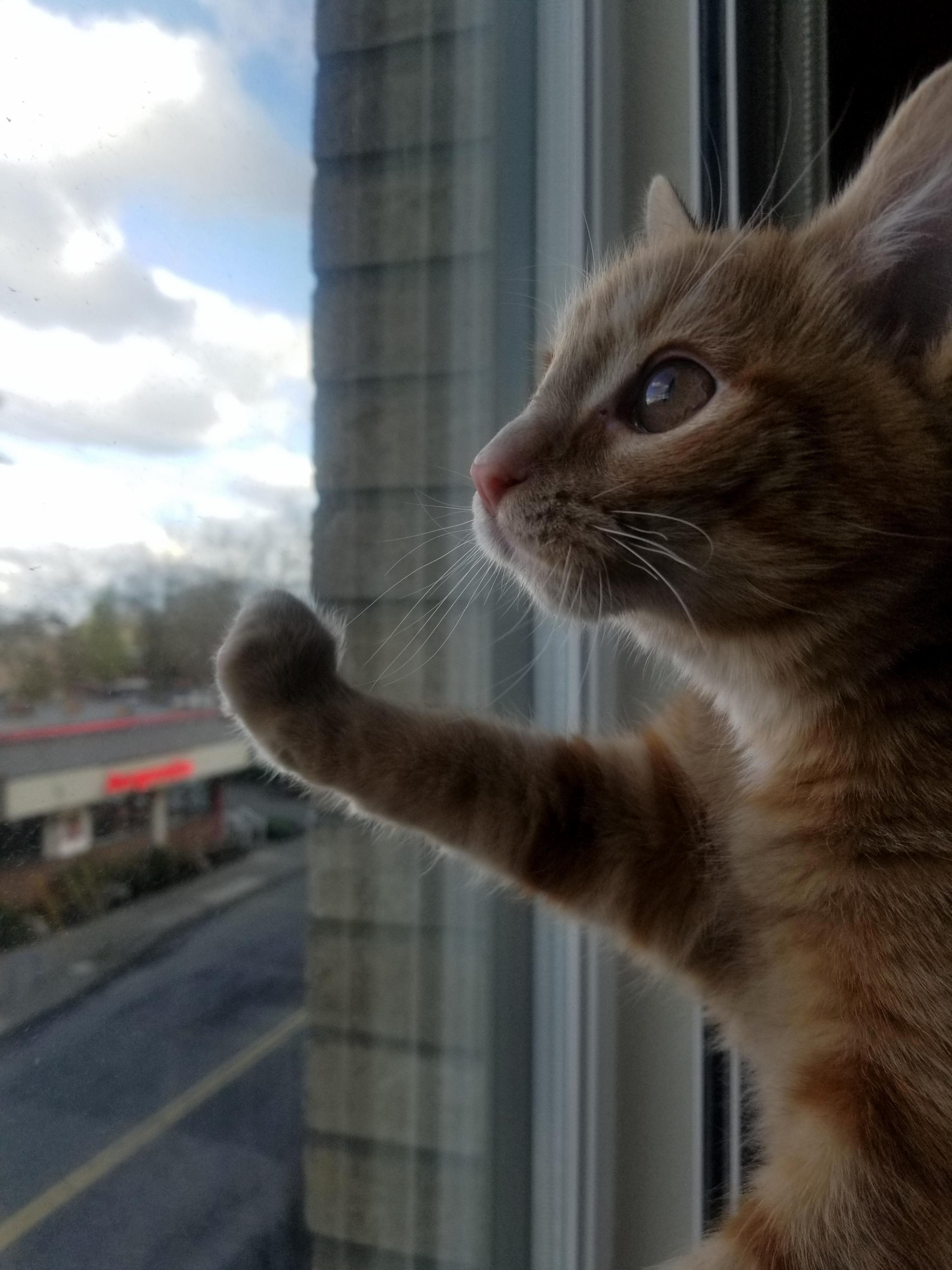 Window boi