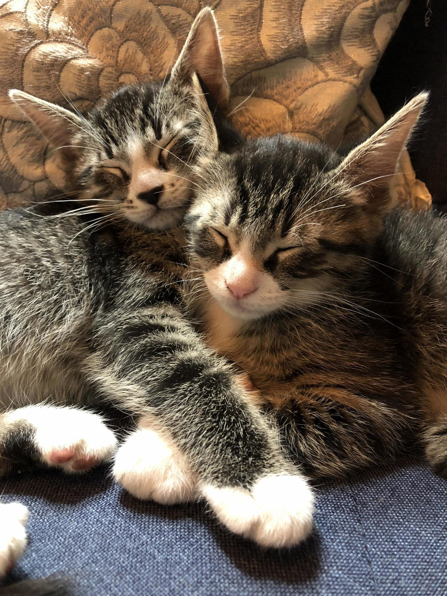 Ive found the bonded pair in my group of fosters captain holt and sarge