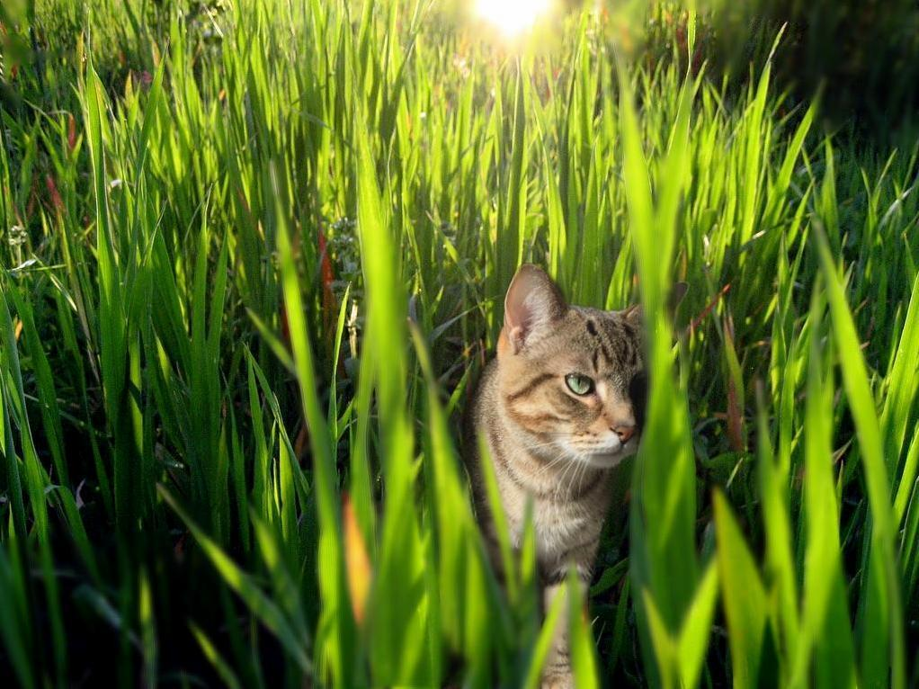 I photoshopped my city kitty into a wild predator. (he said the grass really brings out my eyes)