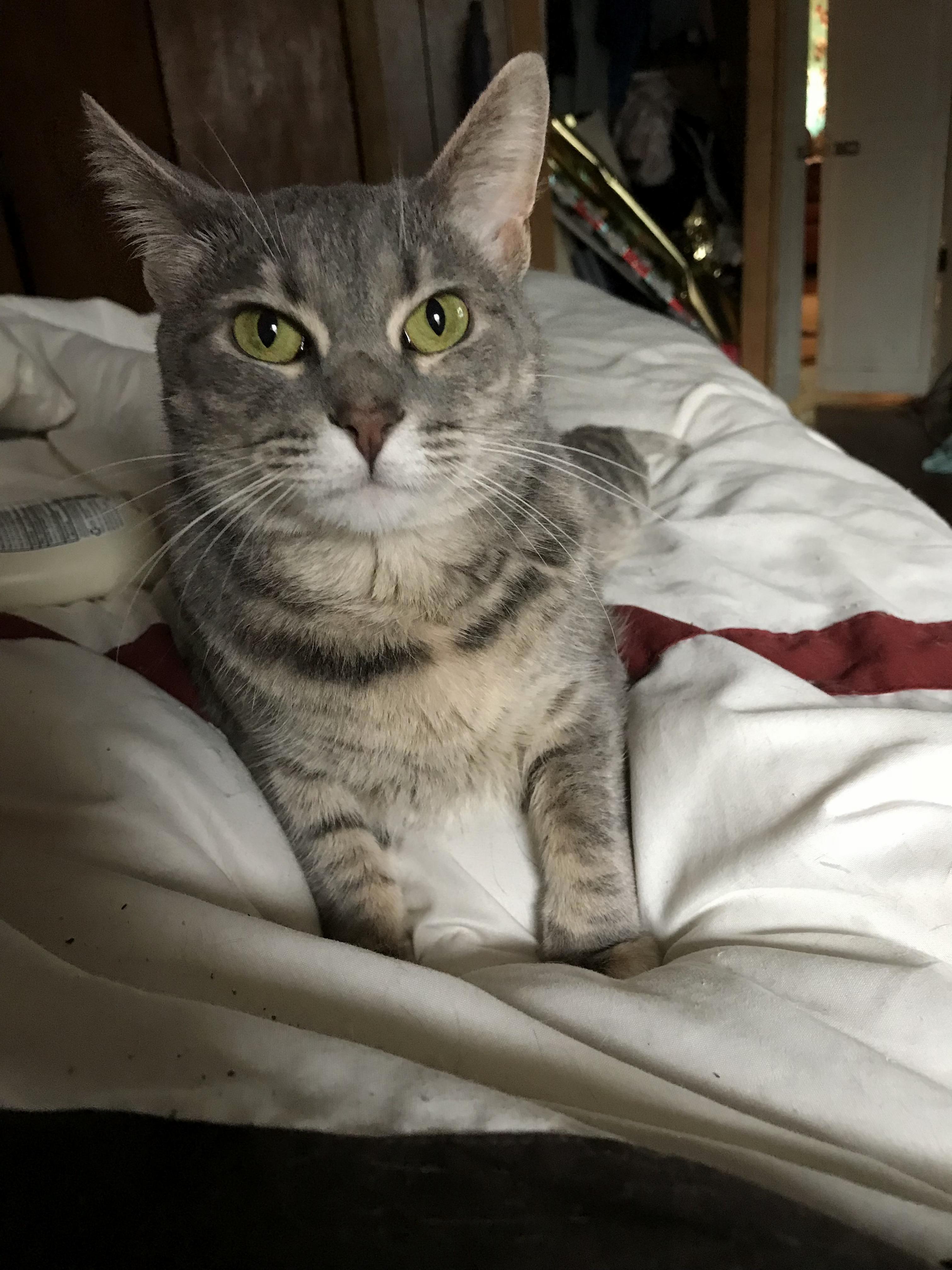 My cat mia