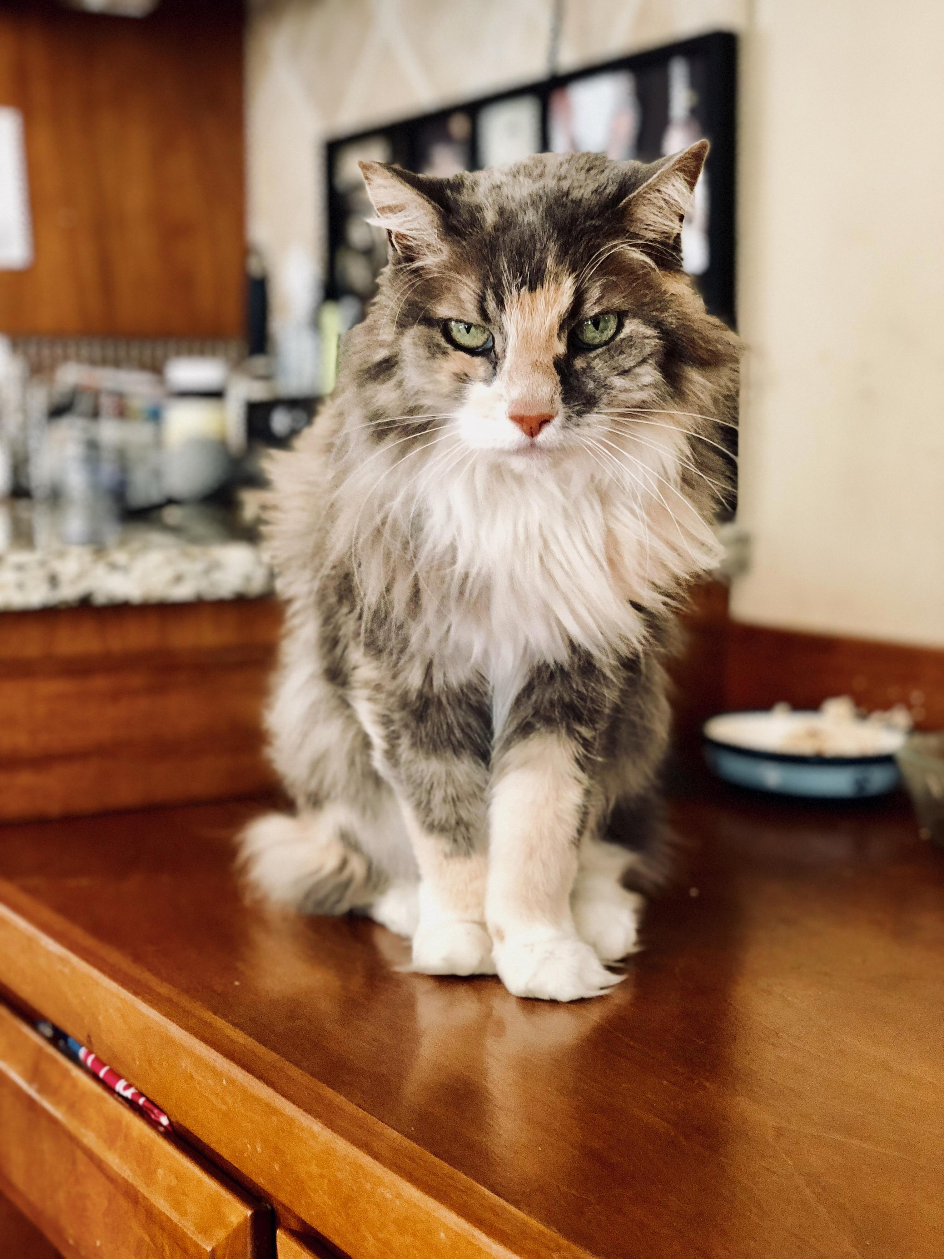 My friends 20 year old girl, beautiful as ever.