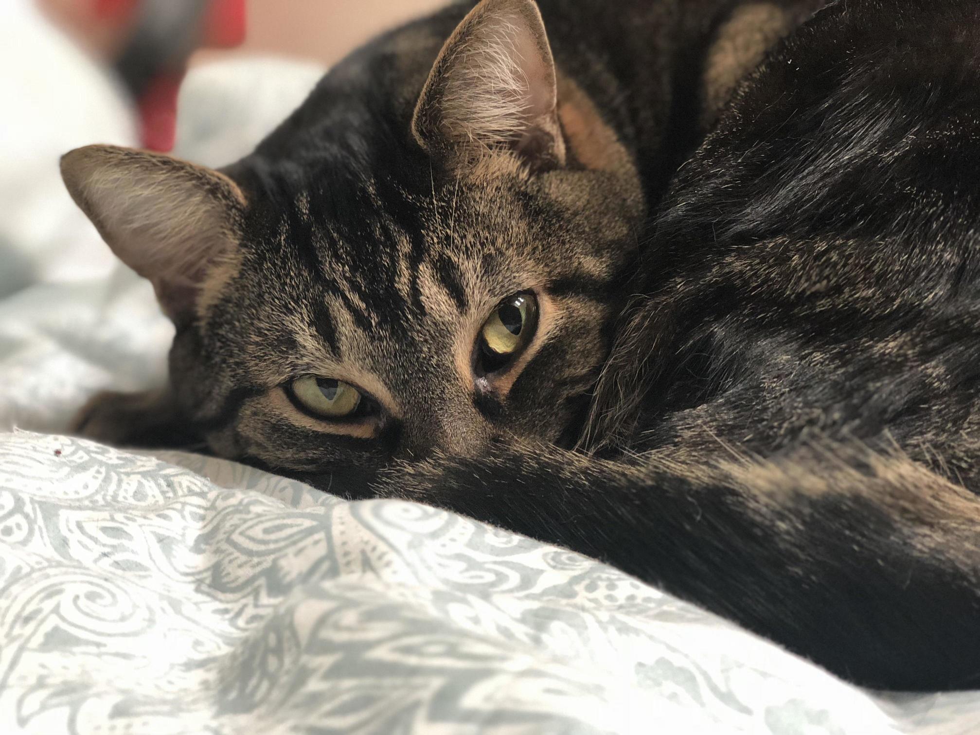 My kitty loki!