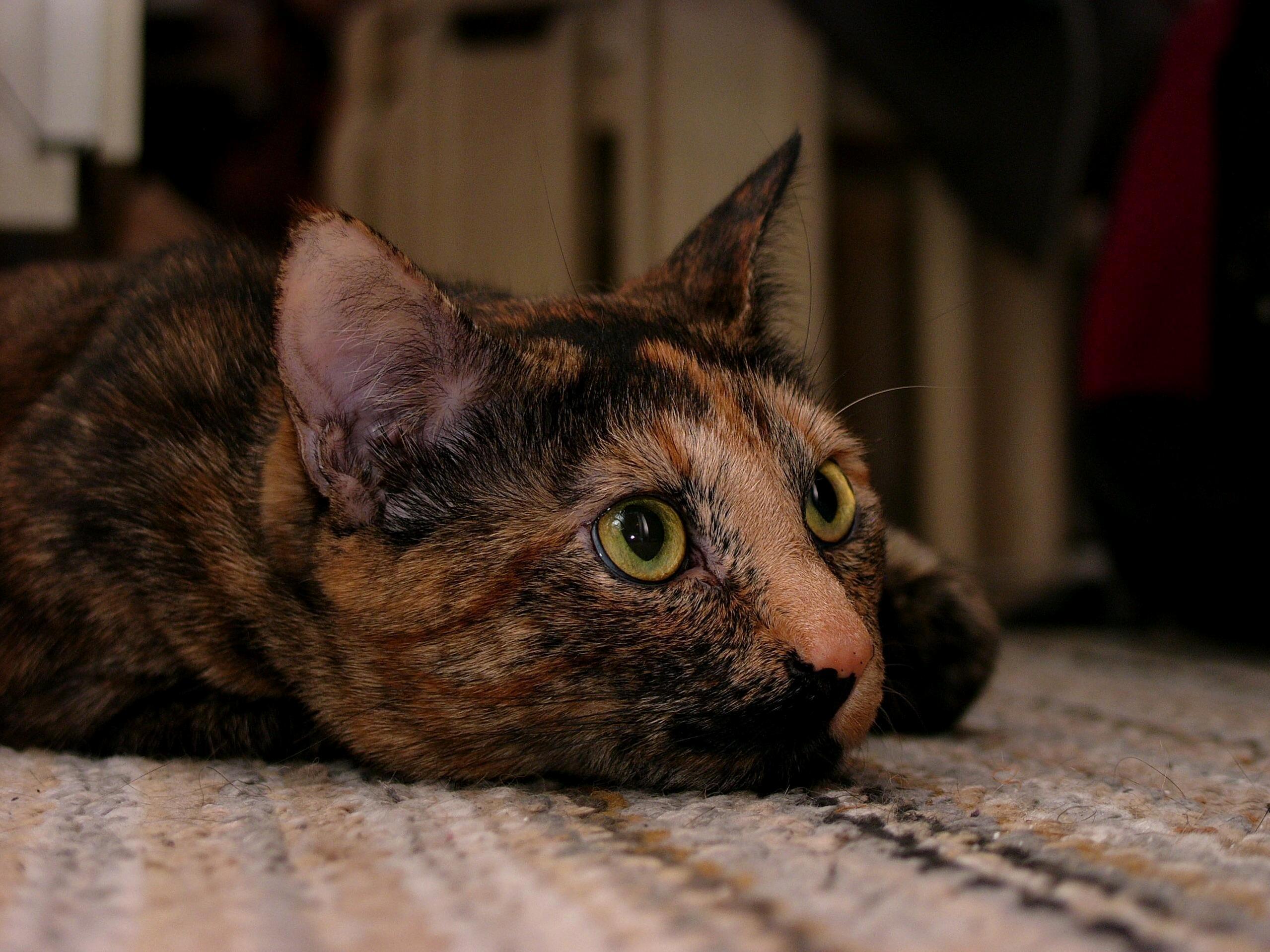 New camera, same great cat.