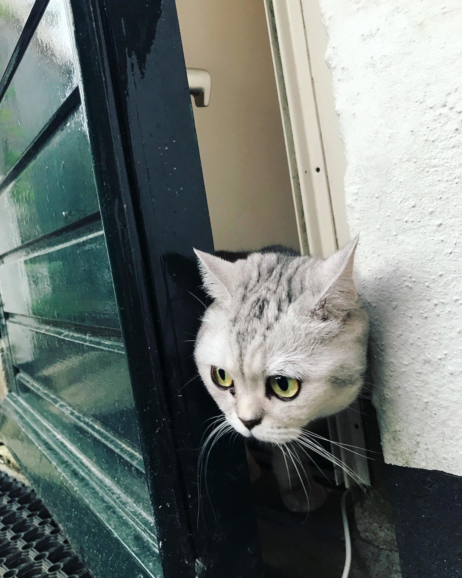 Peek a boo! hello world 