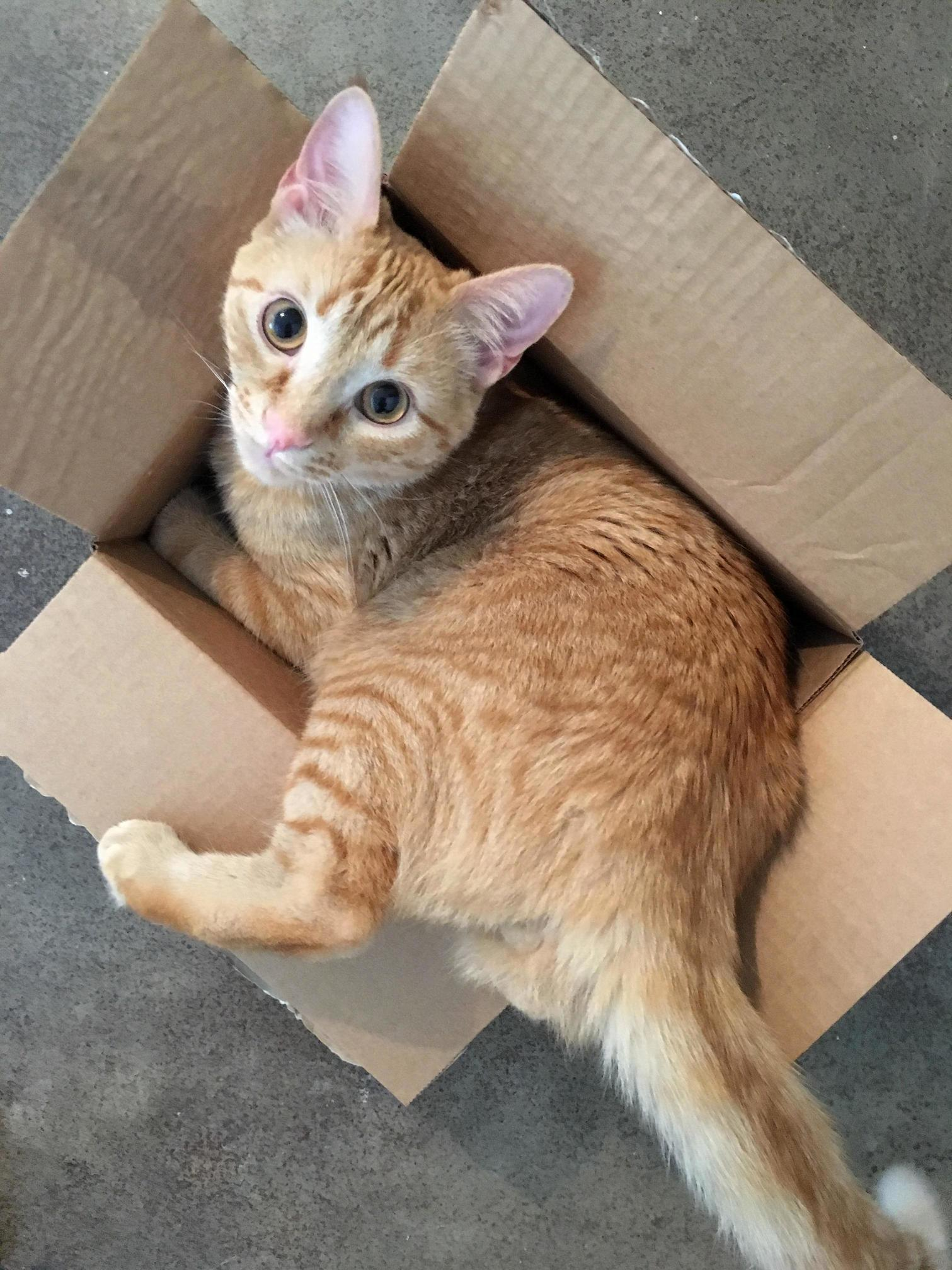 What no, i havent been eating too many treats! this box was always a little snug!