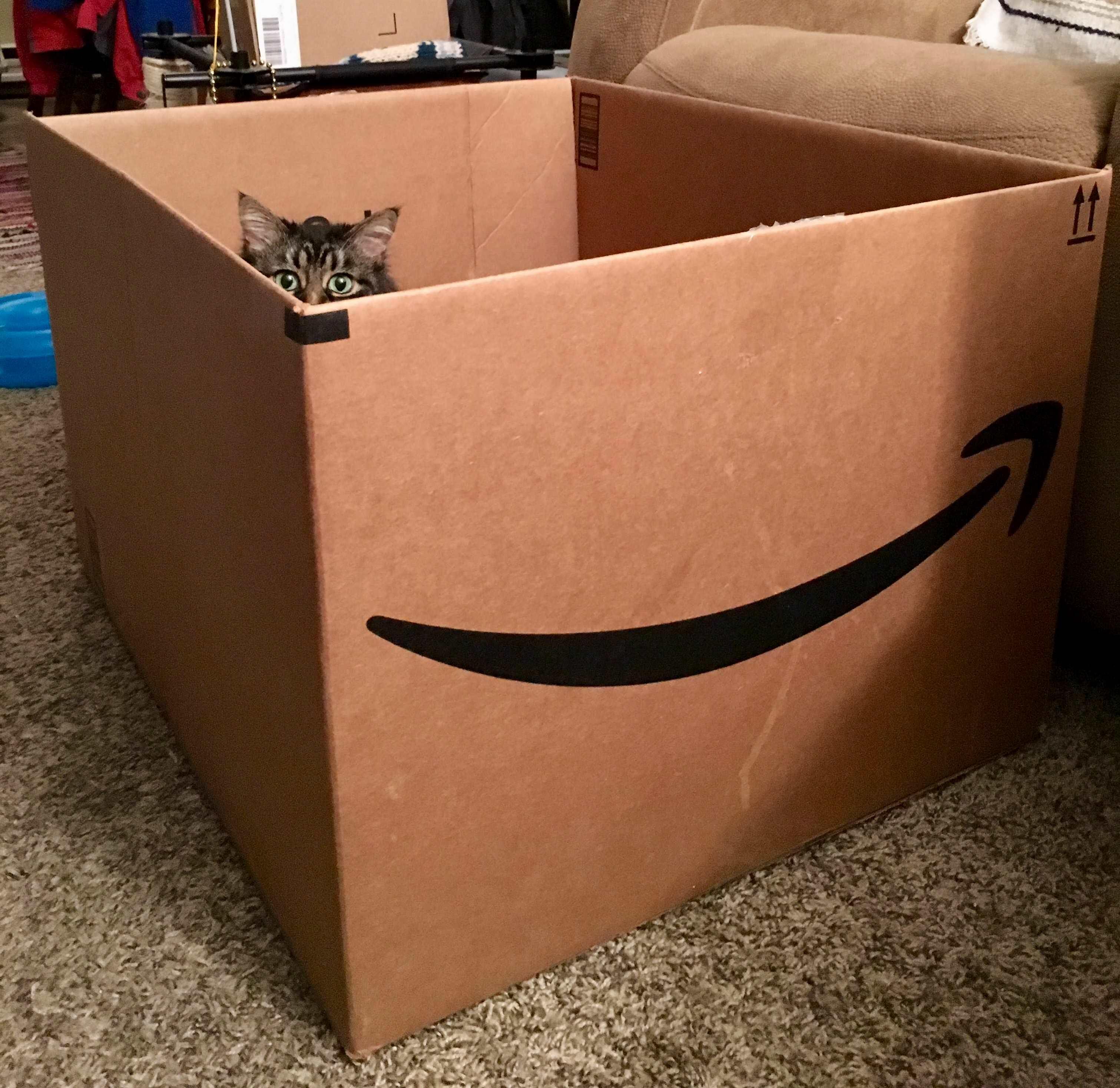 Big box….little kitty