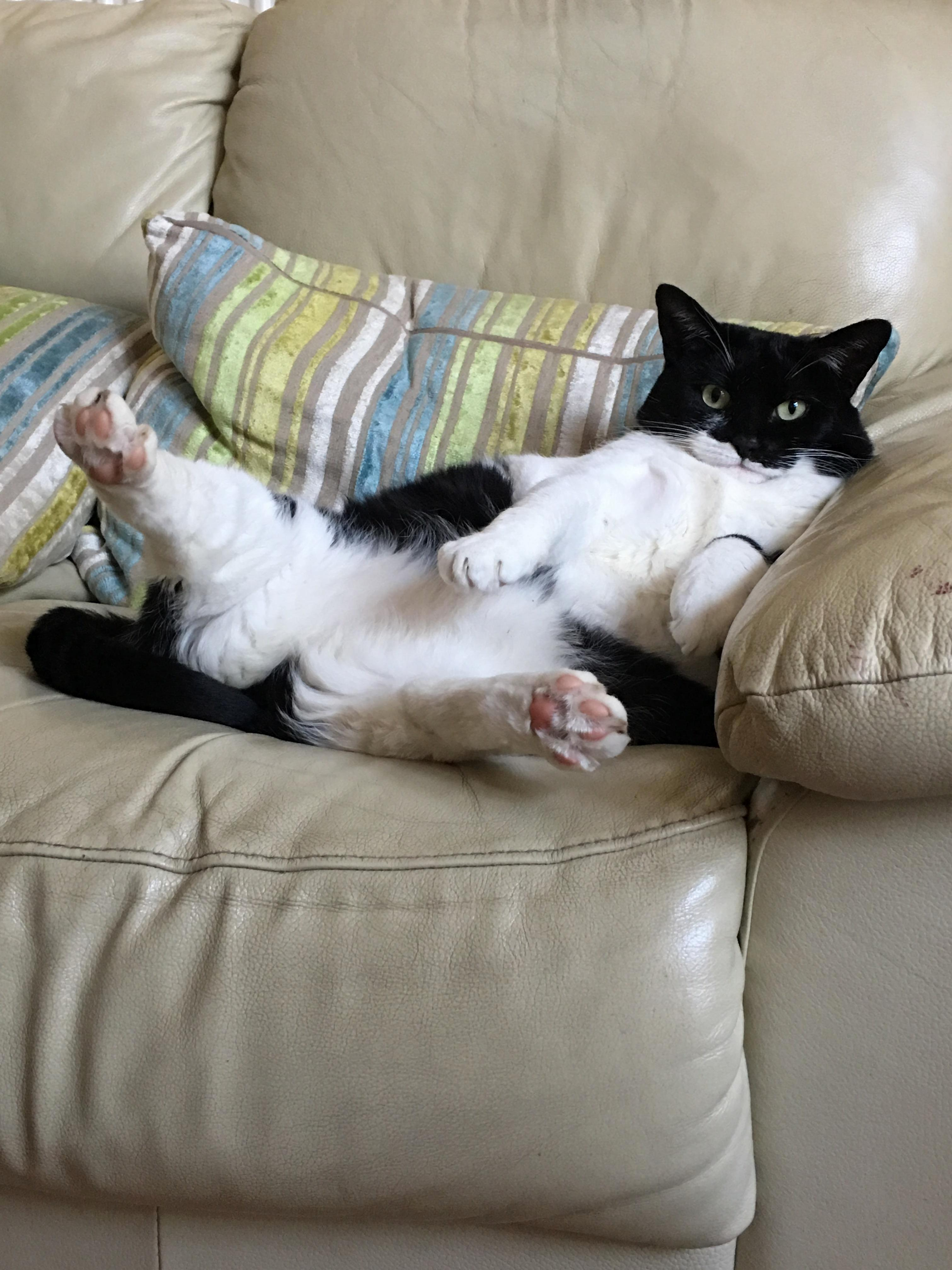 Comfy there