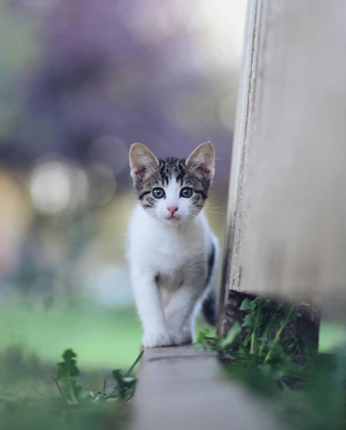 Curious kitten of istanbul