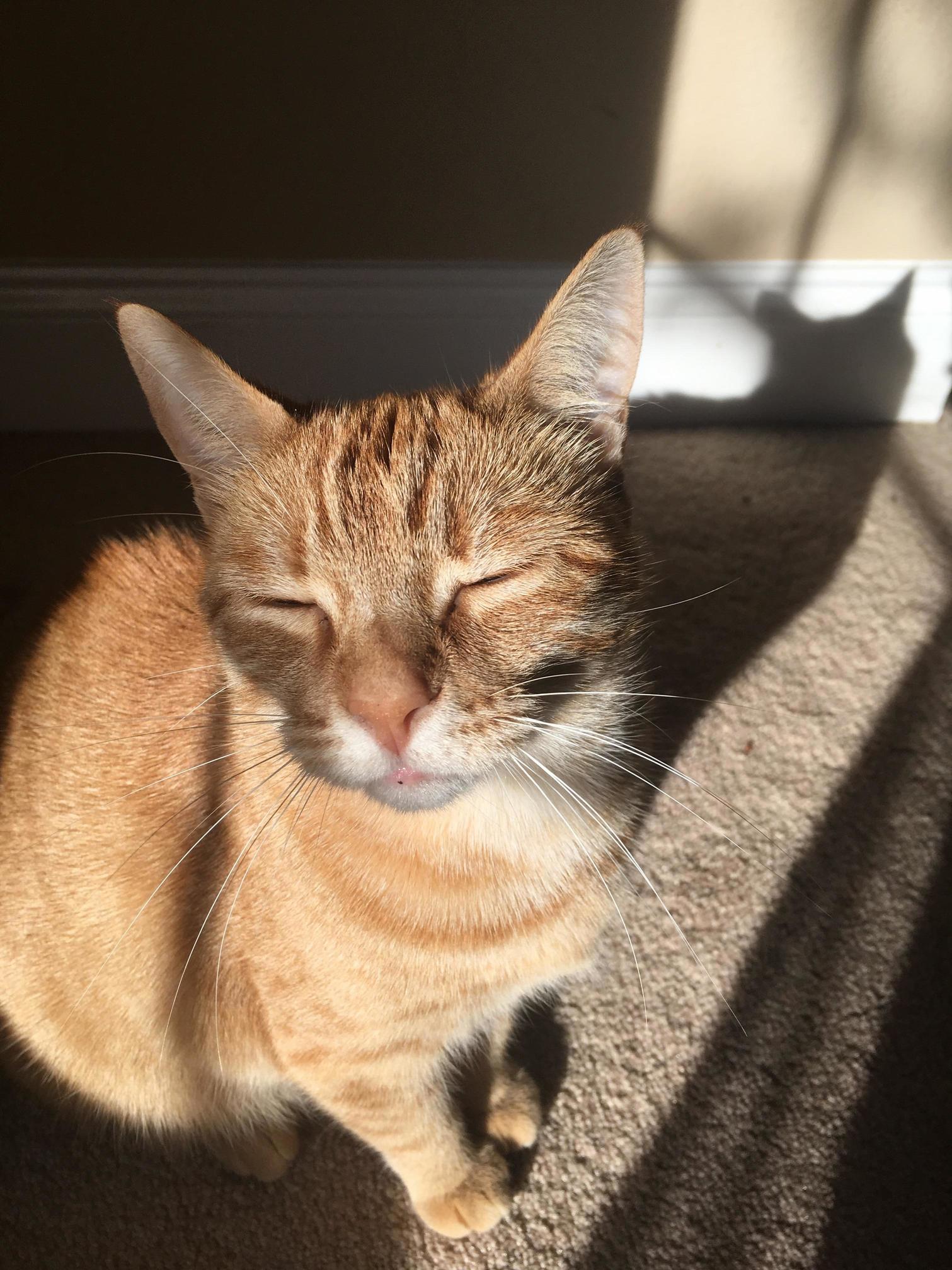 Dixon enjoying the sunshine
