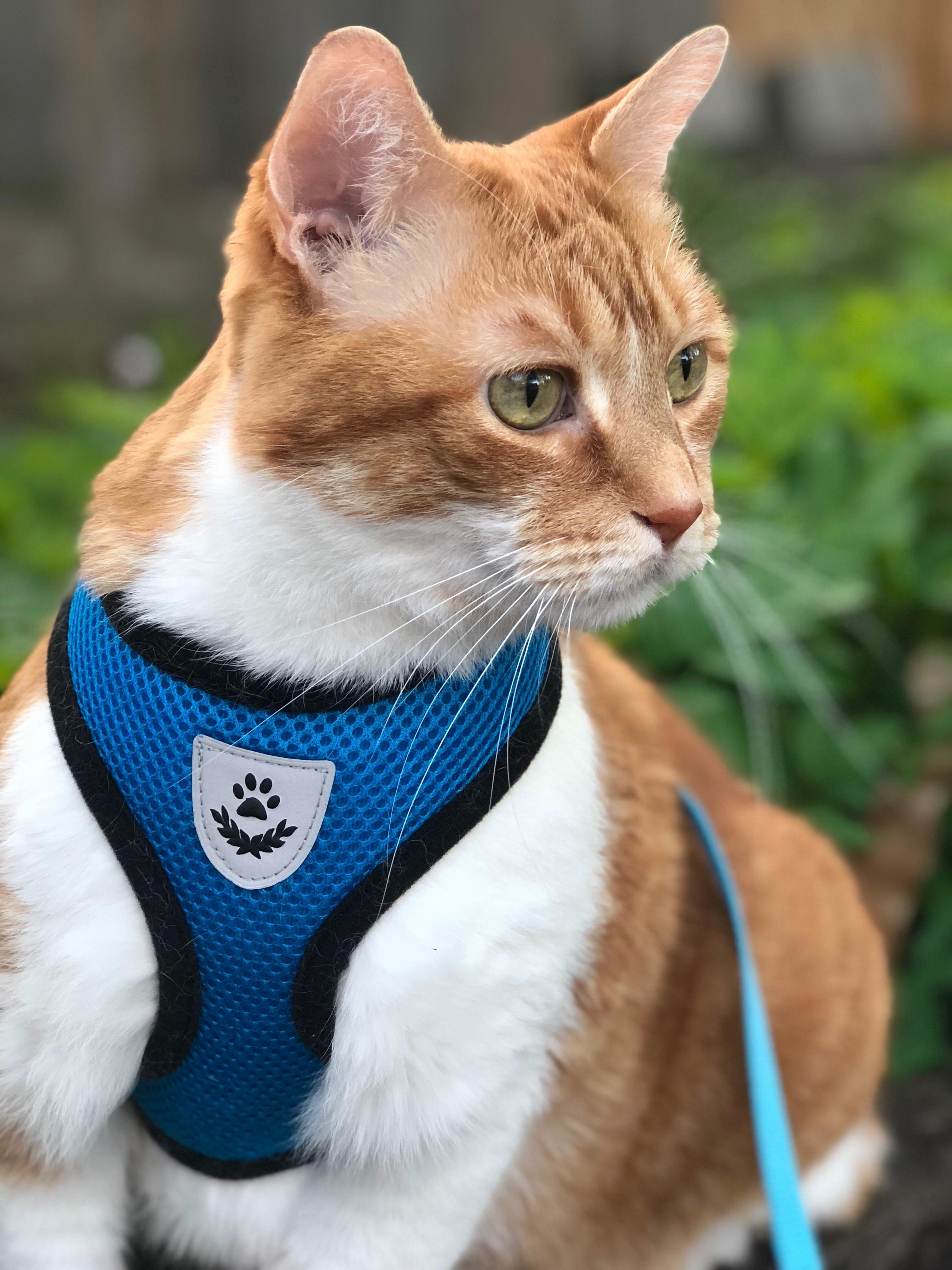 Explorer spots catnip
