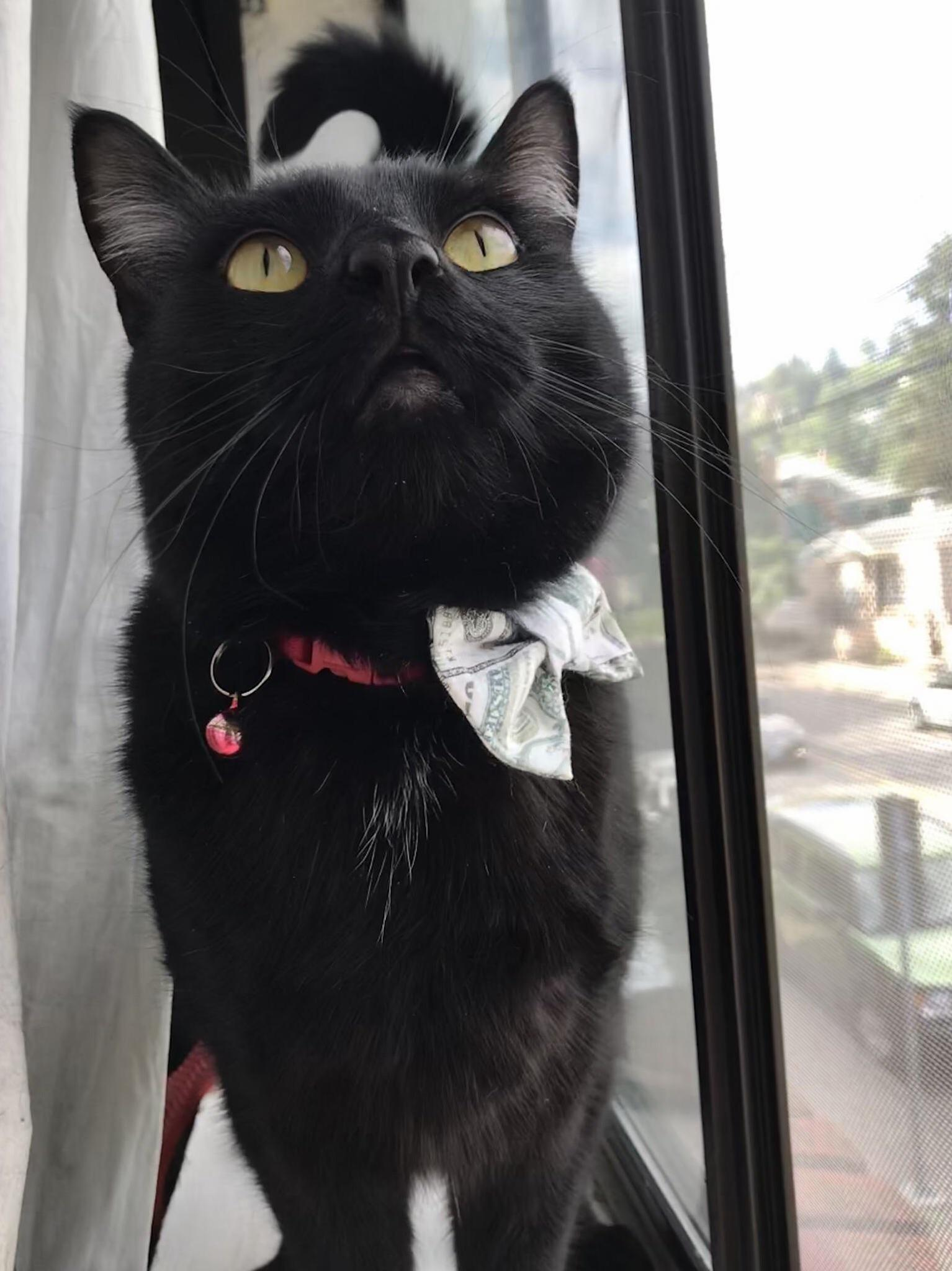 Fig is a very handsome boy