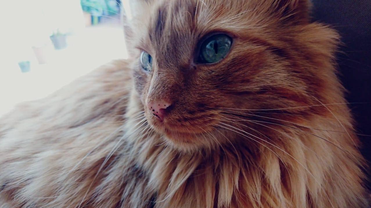 Fluff cat a.k.a. caillou