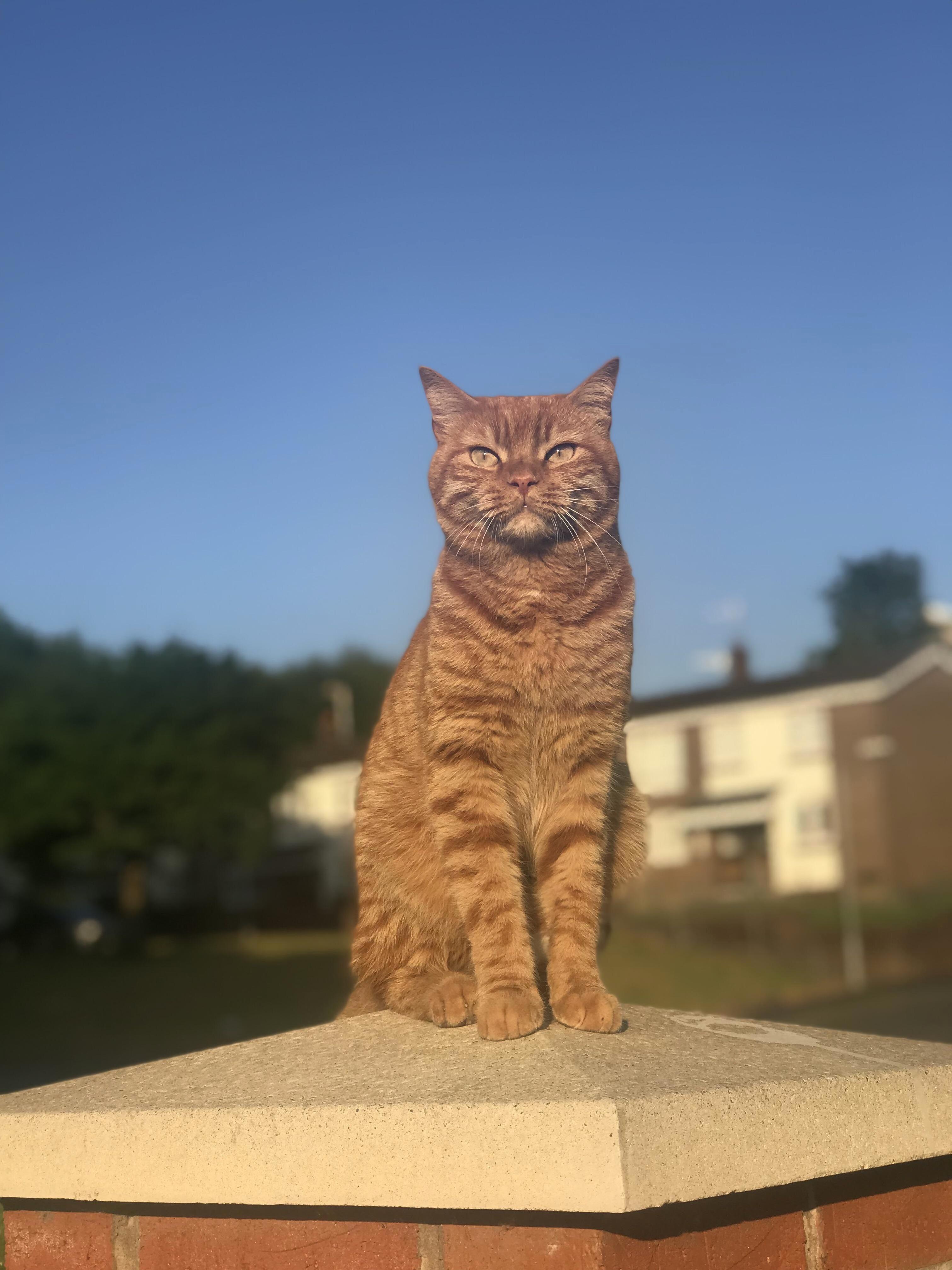 Harry out enjoying the sun 