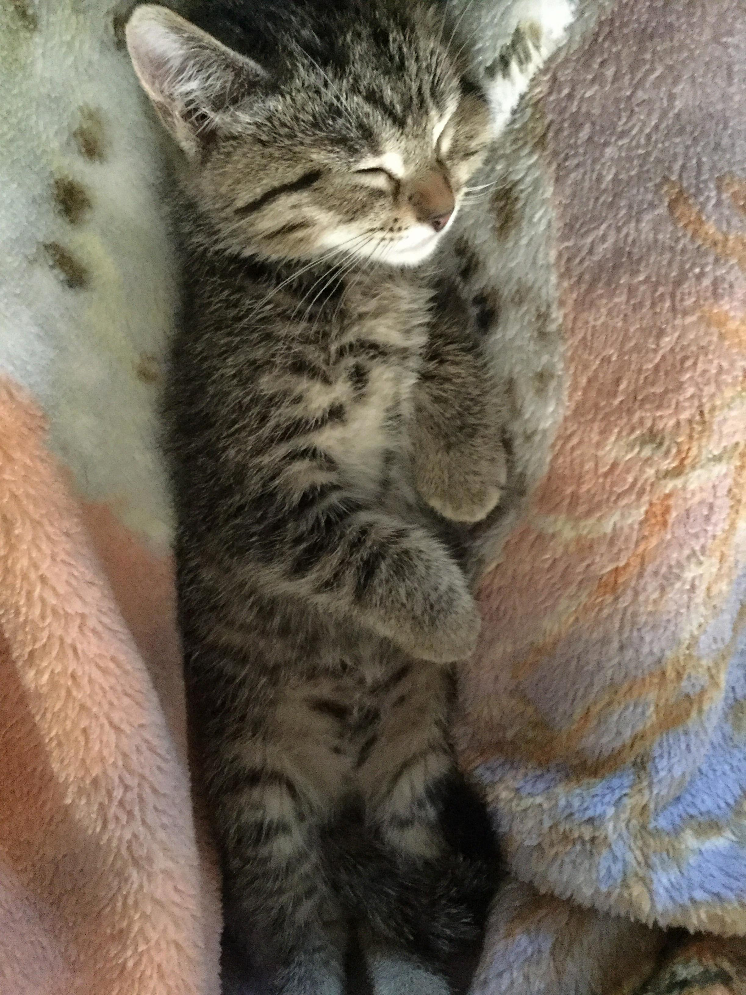 I wish i could sleep half as soundly as our new kitten!