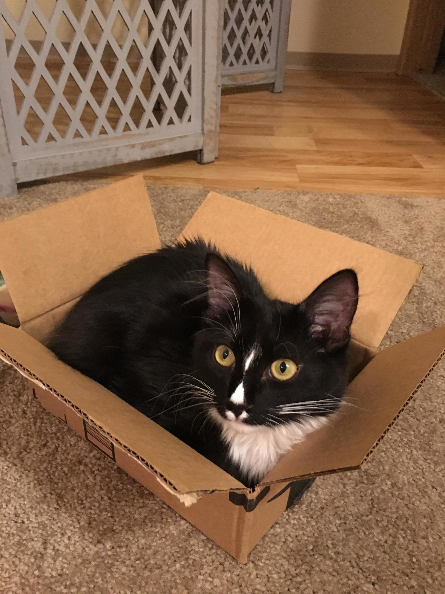 If he fits, he sits