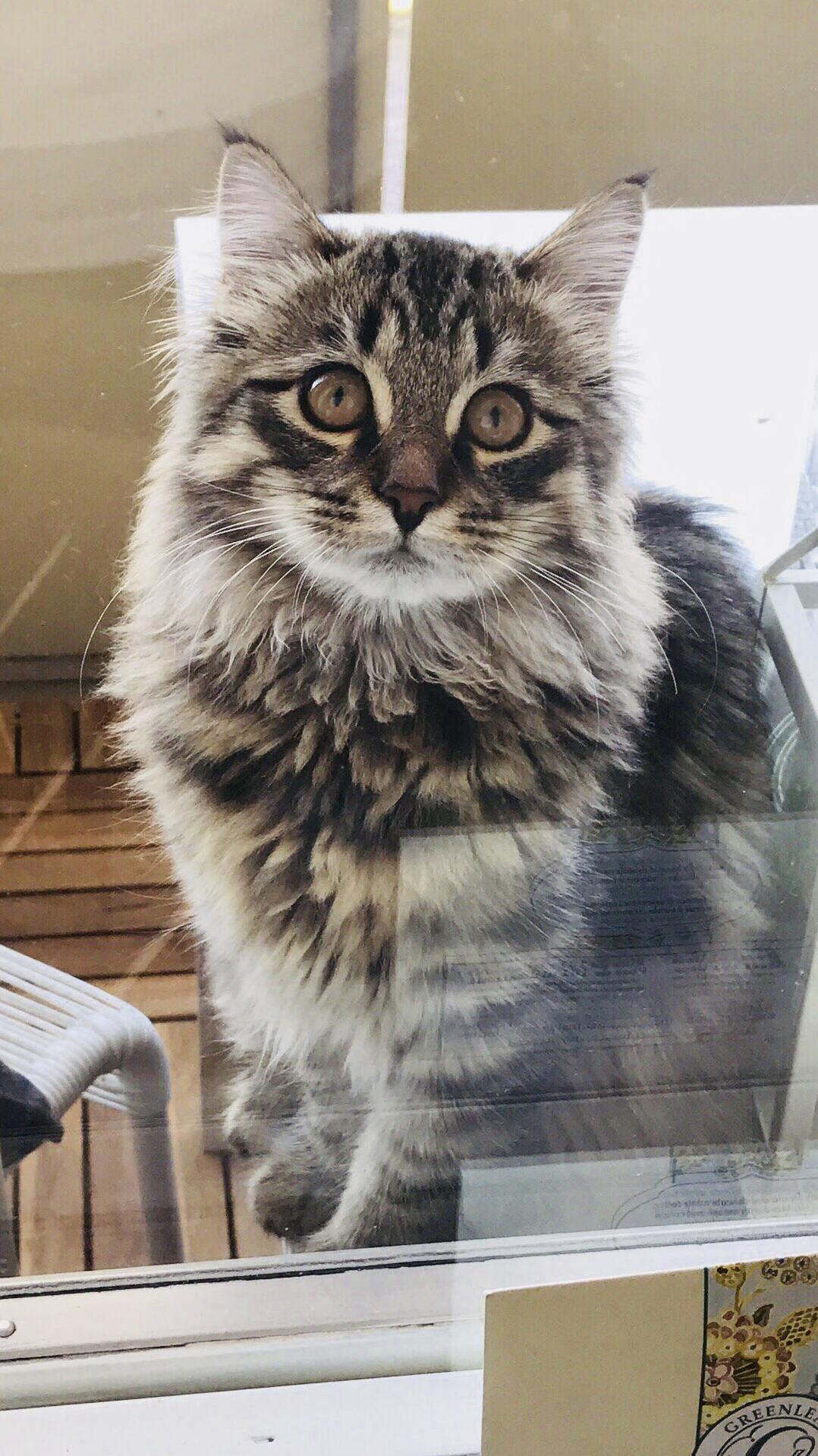 Jussi(siberian) 5 months likes the balcony 