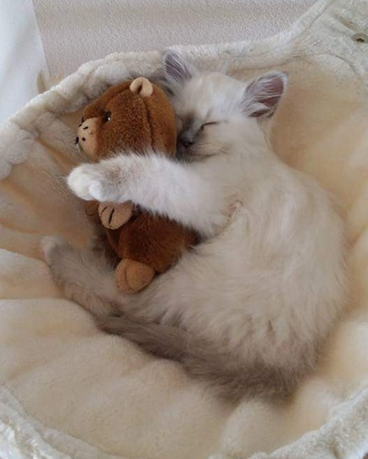Kitty hugging her precious toy 3