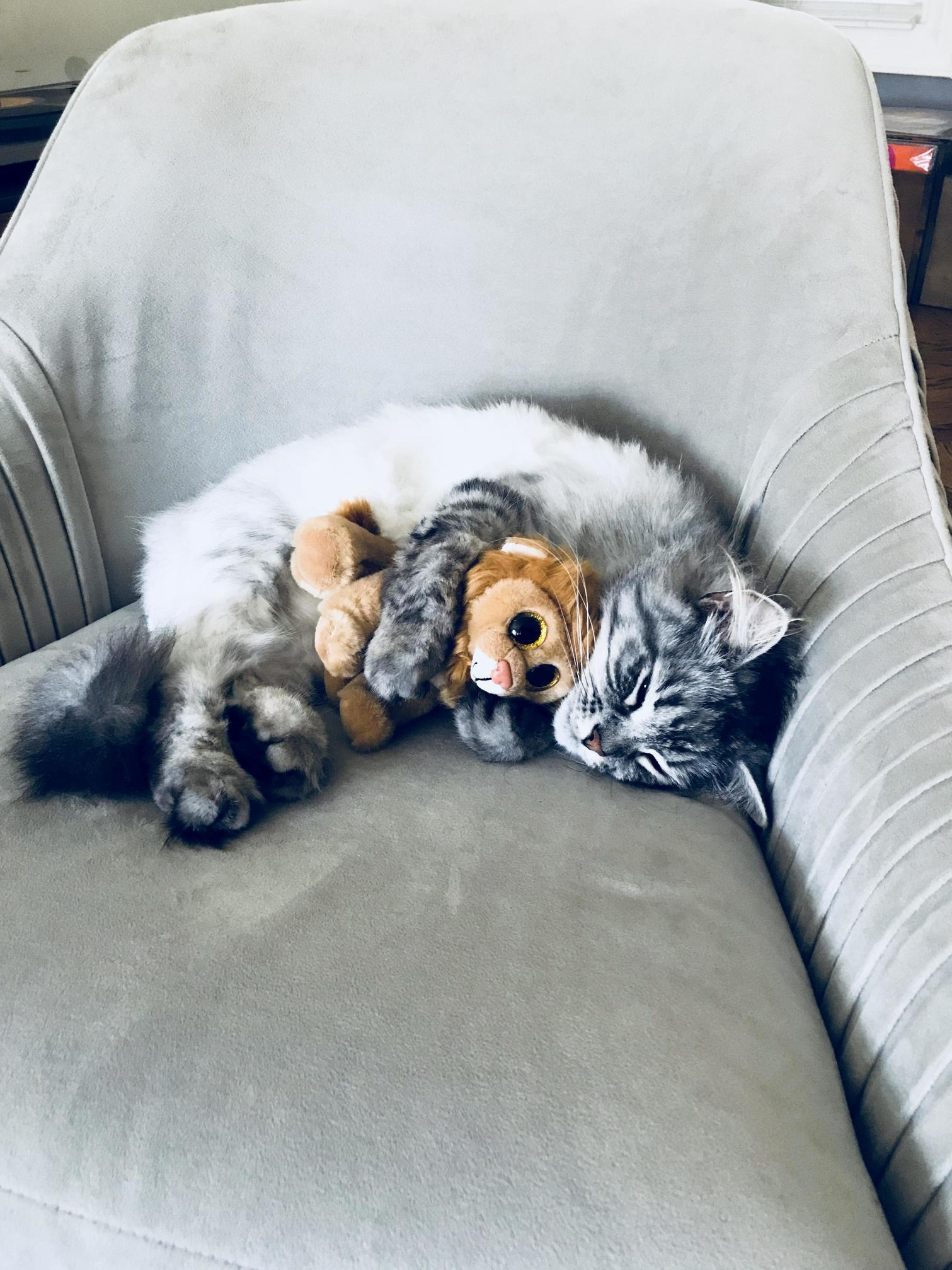 Mitri, the 3 year old siberian, is mourning the sudden loss of his twin brother