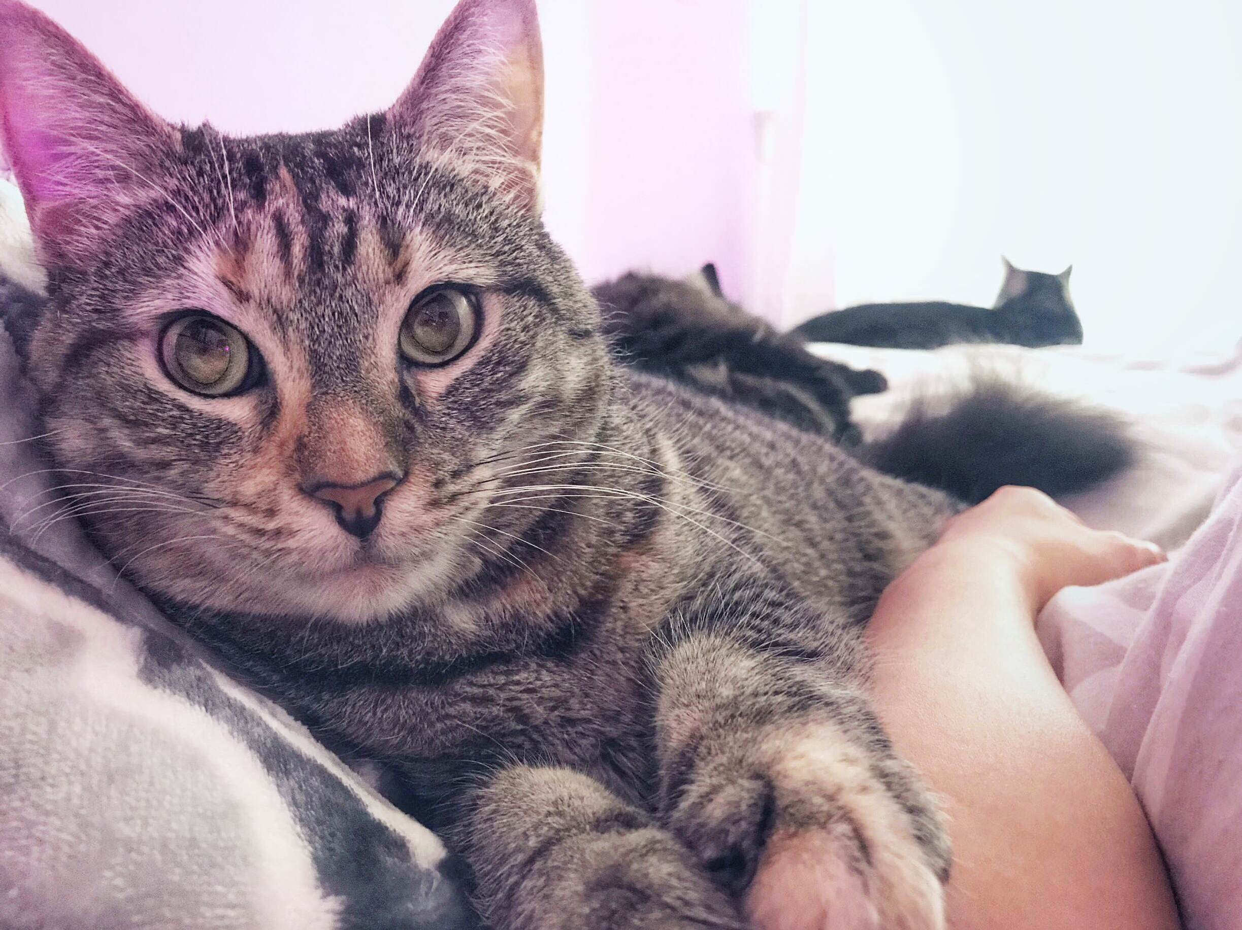 Now this is how you wake up. i love being a cat lady.