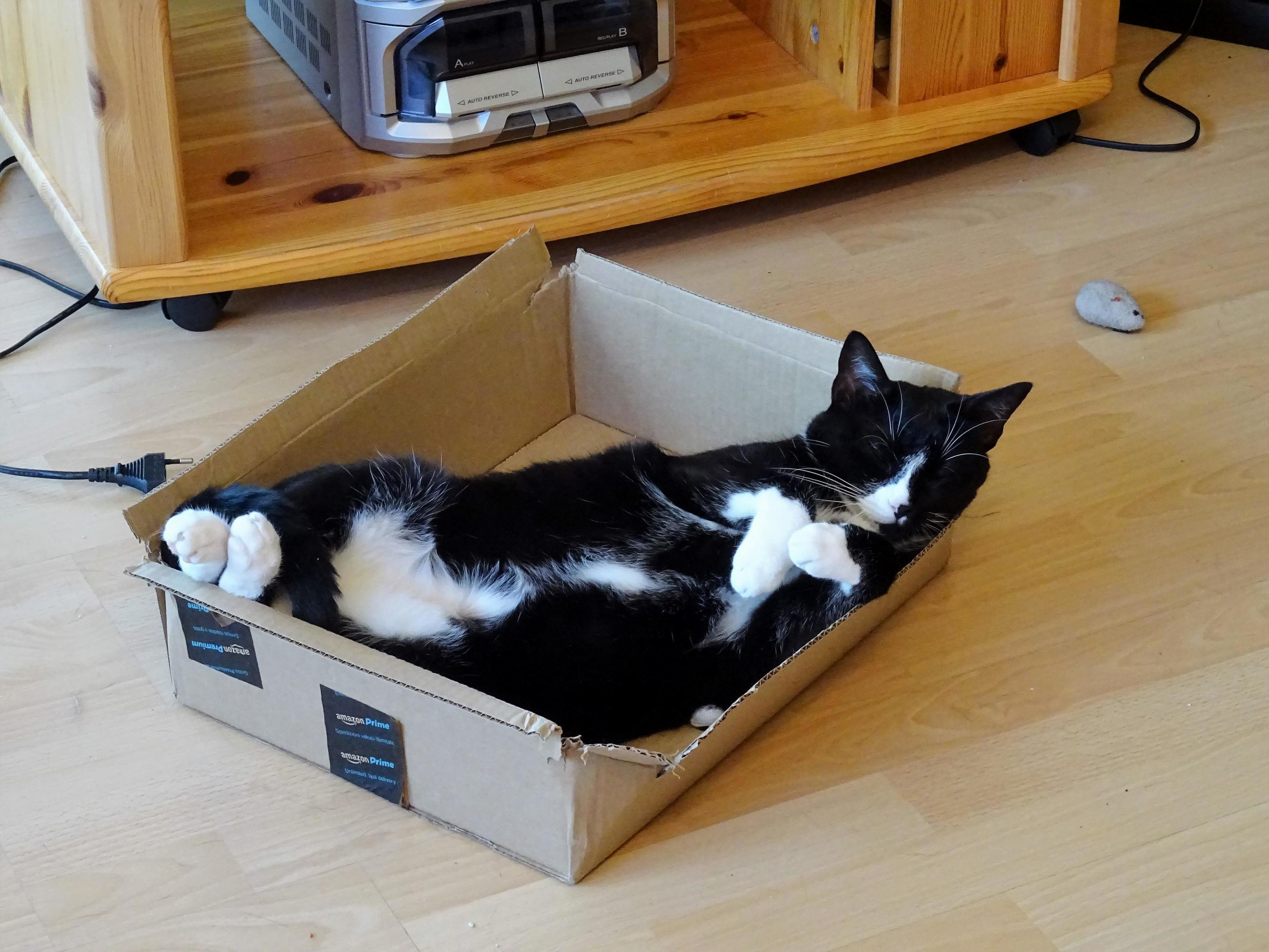 Online purchases were the best invention since the beginning of cats