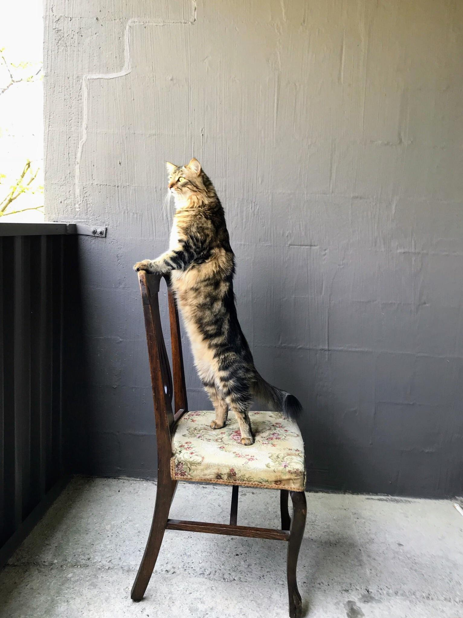 Our majestic floof surveying his kingdom