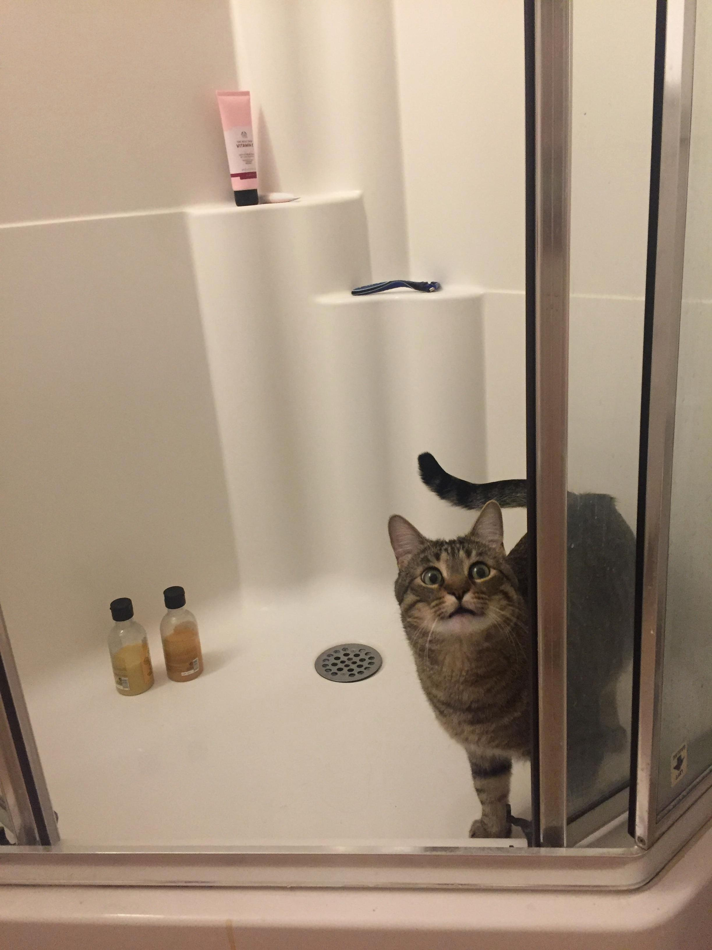 Our scaredy cat finally got the courage to go into the shower – and instantly regretted it.
