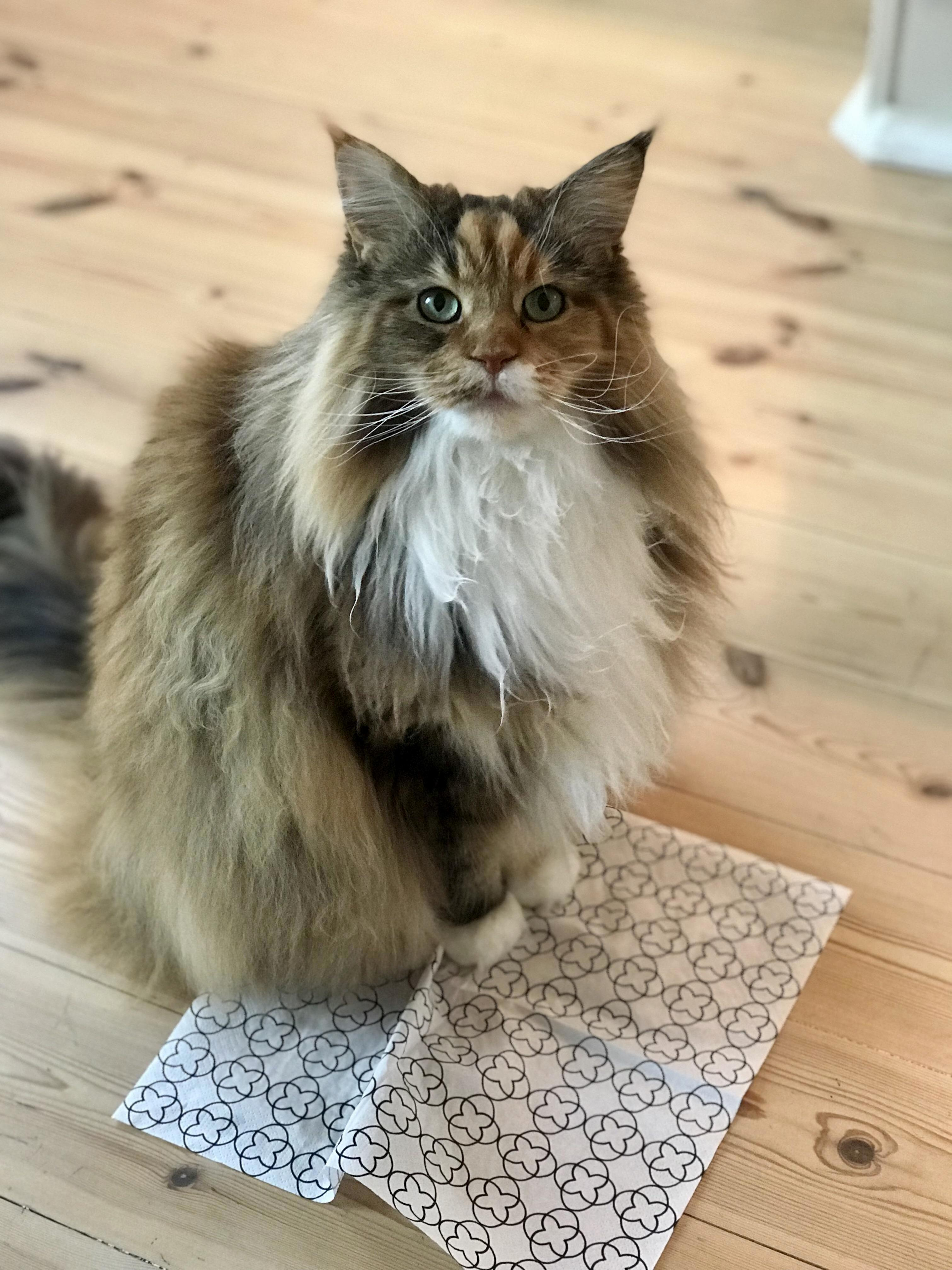 Pixel thinks that napkins are also good for sits