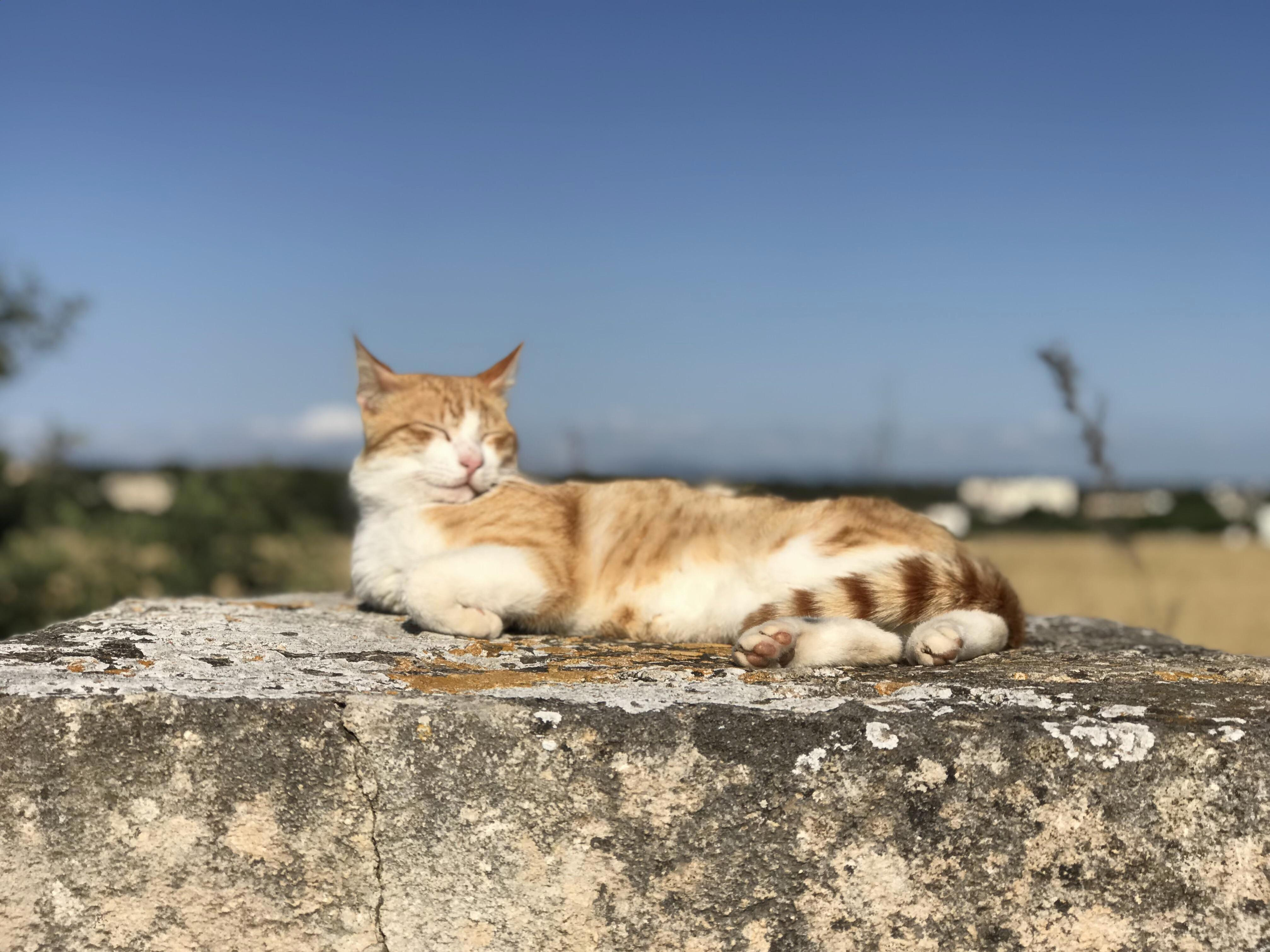 Saw this guy sunbathing in sicily