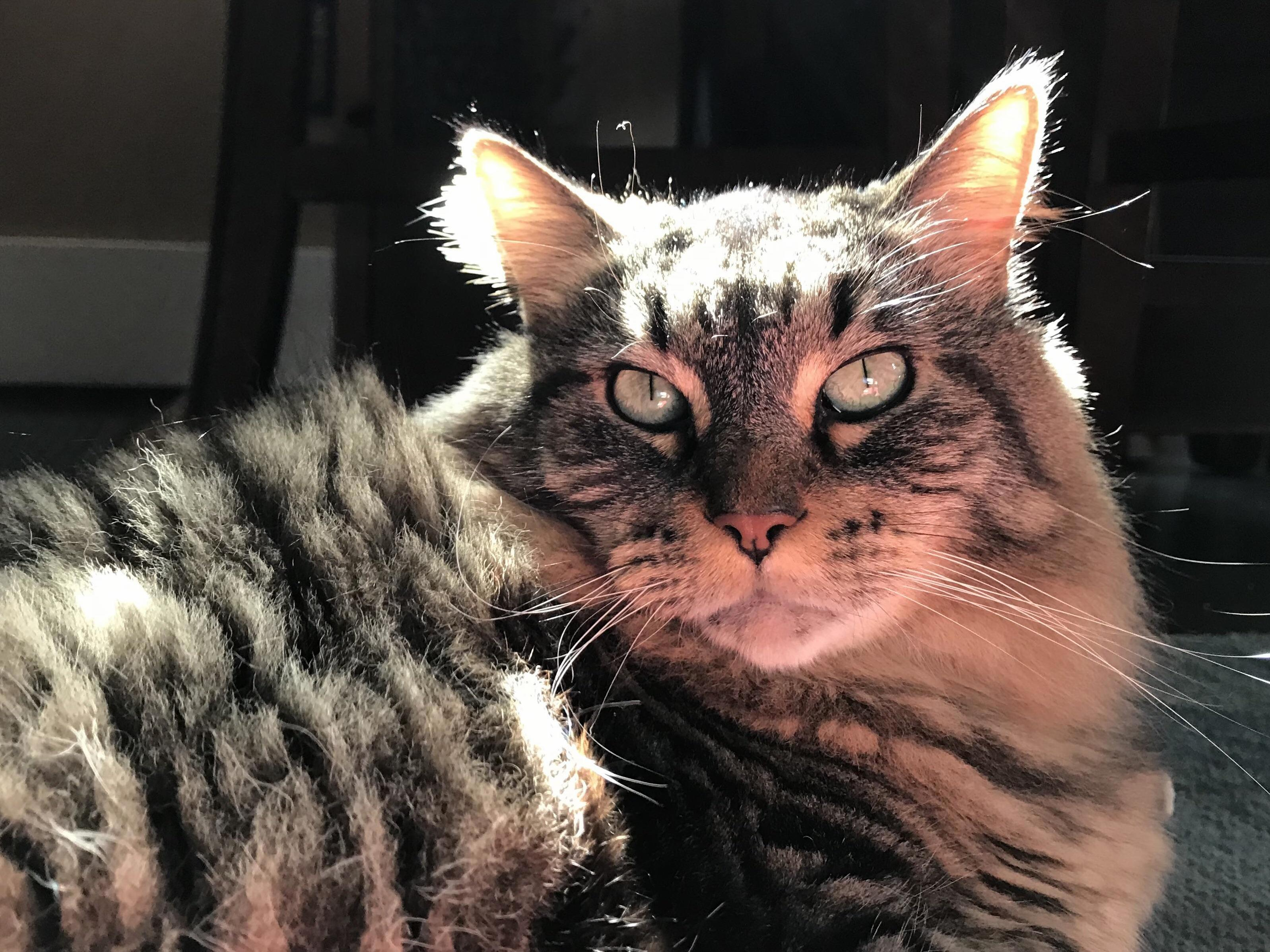 The way the light illuminated my boys earfluff.