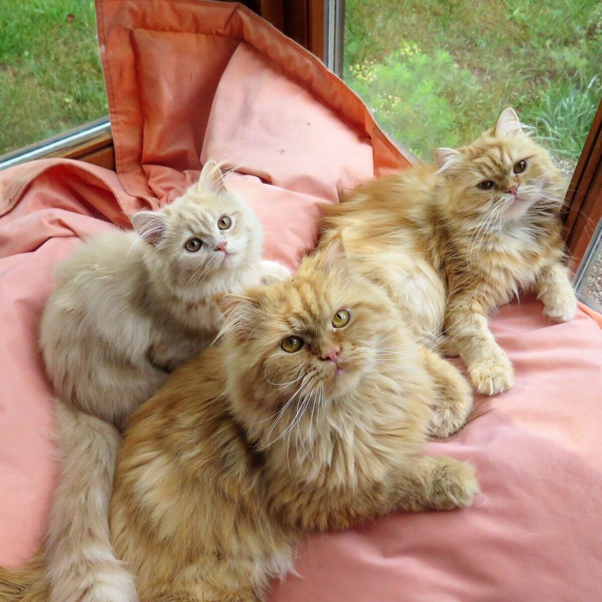 These three didnt get the memo that cats dont usually form traditional families (daughter, father, mother)