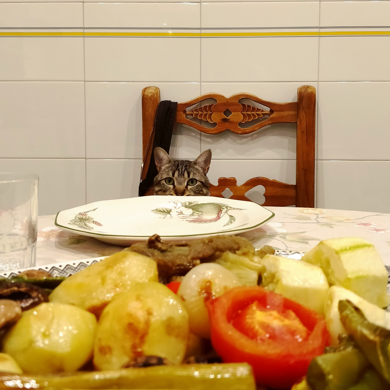Where is my tuna, human