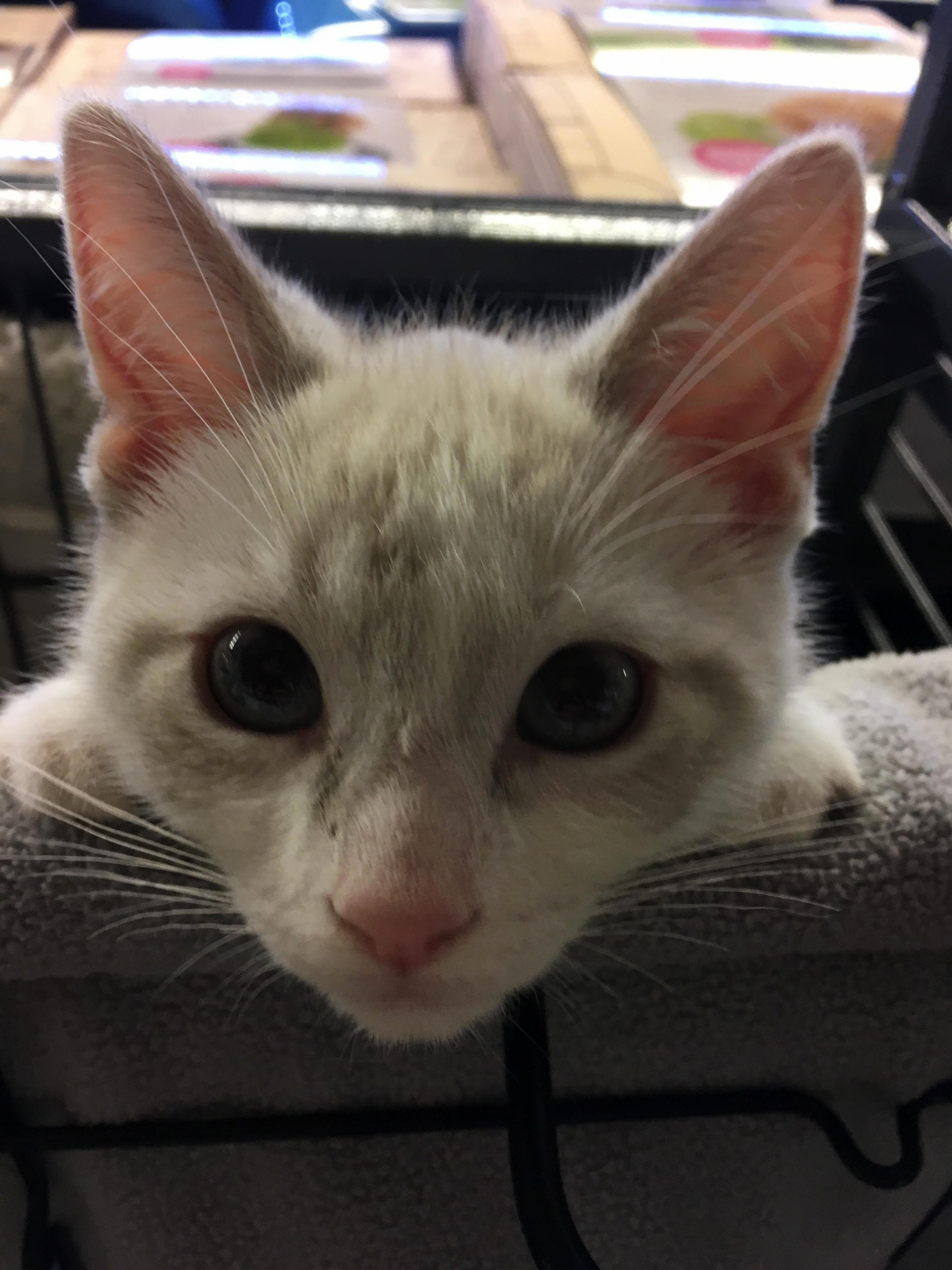 hello. yes, i would like a home. this sweet boy is one of two foster kittens at my work.