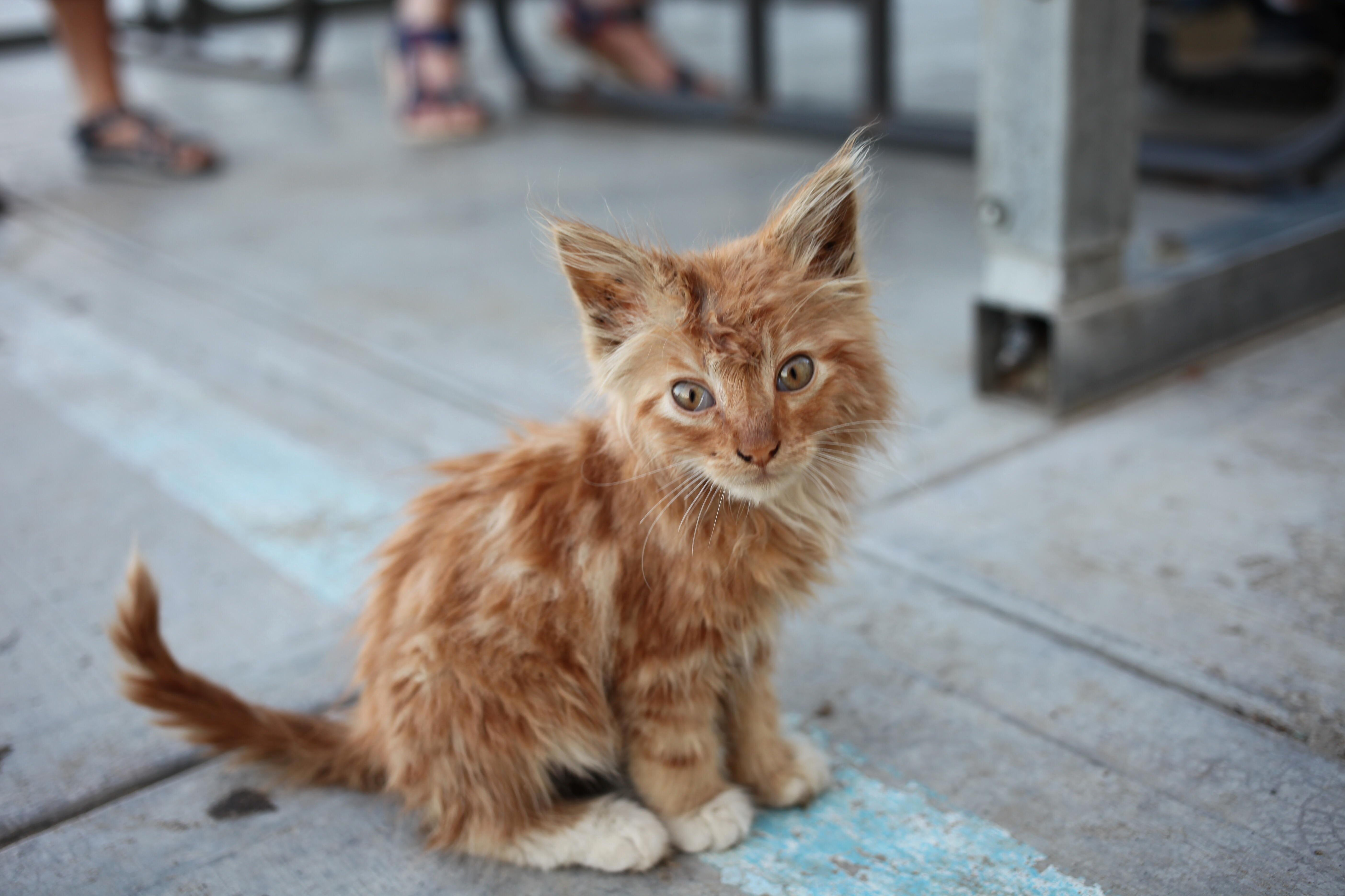 Adorable stray outside of a restaurant