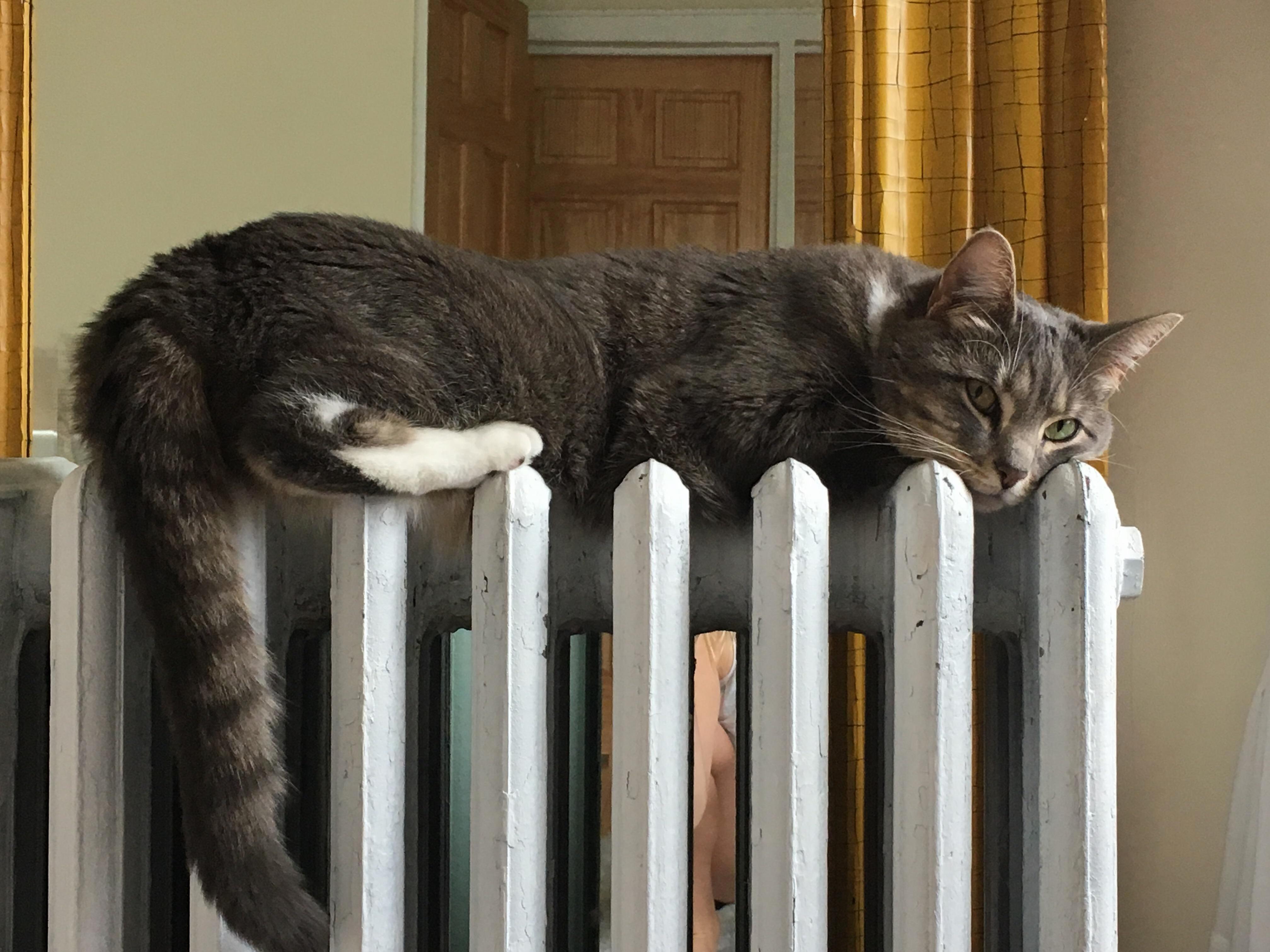 Bella loves sleeping on the radiator