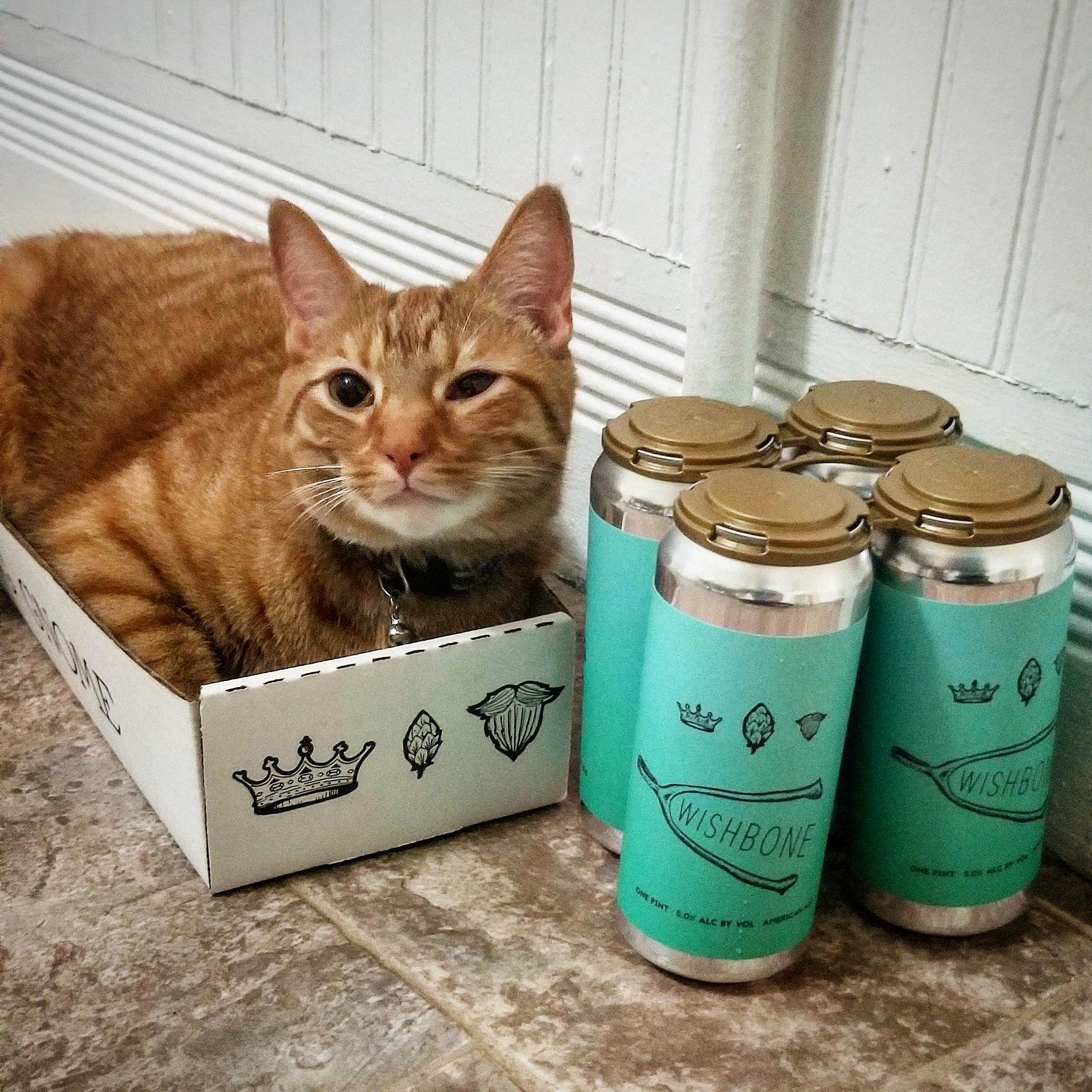 Carl was as excited for the box as i was for the beer.