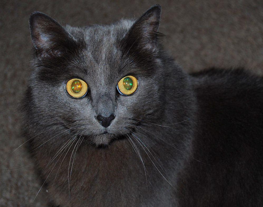 Found this photo of my cat, willow, showing off the opals in her eyes
