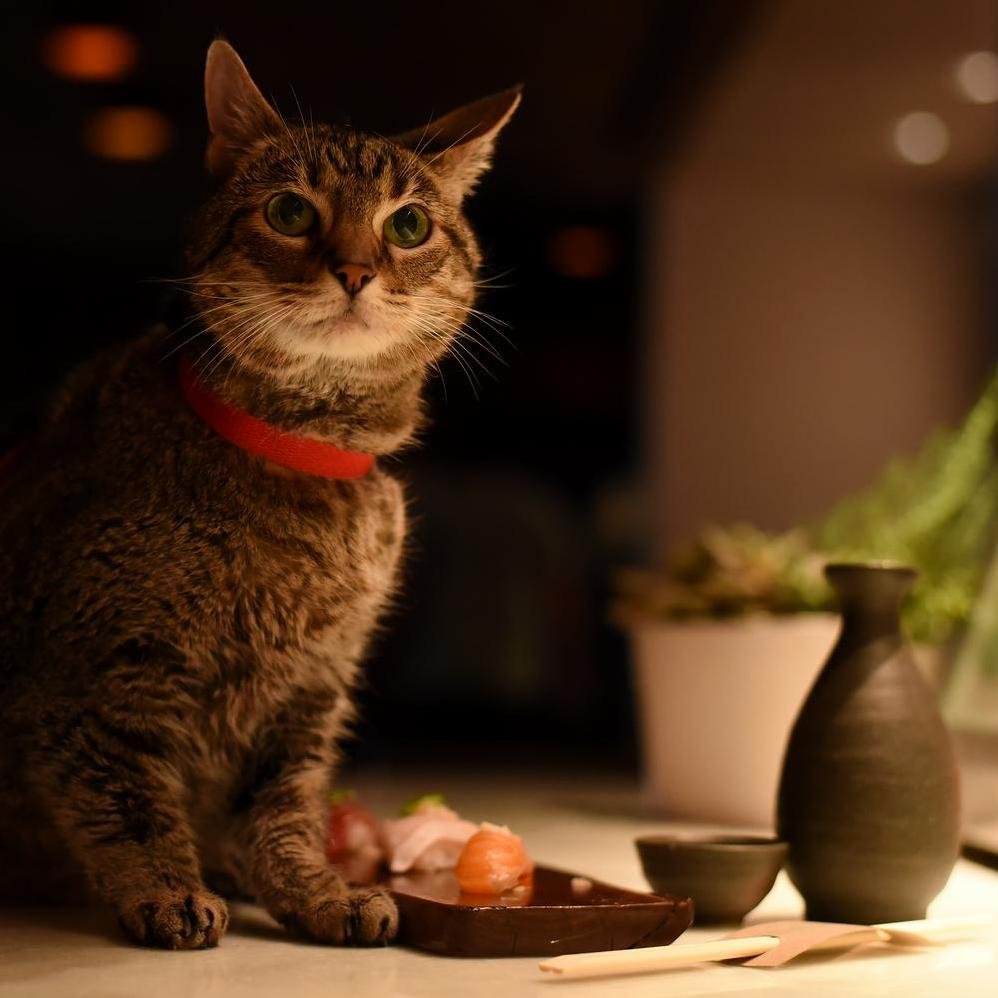 I got to do a photoshoot for a local pet adoption group where i met chuey, the cat who secretly hates sushi