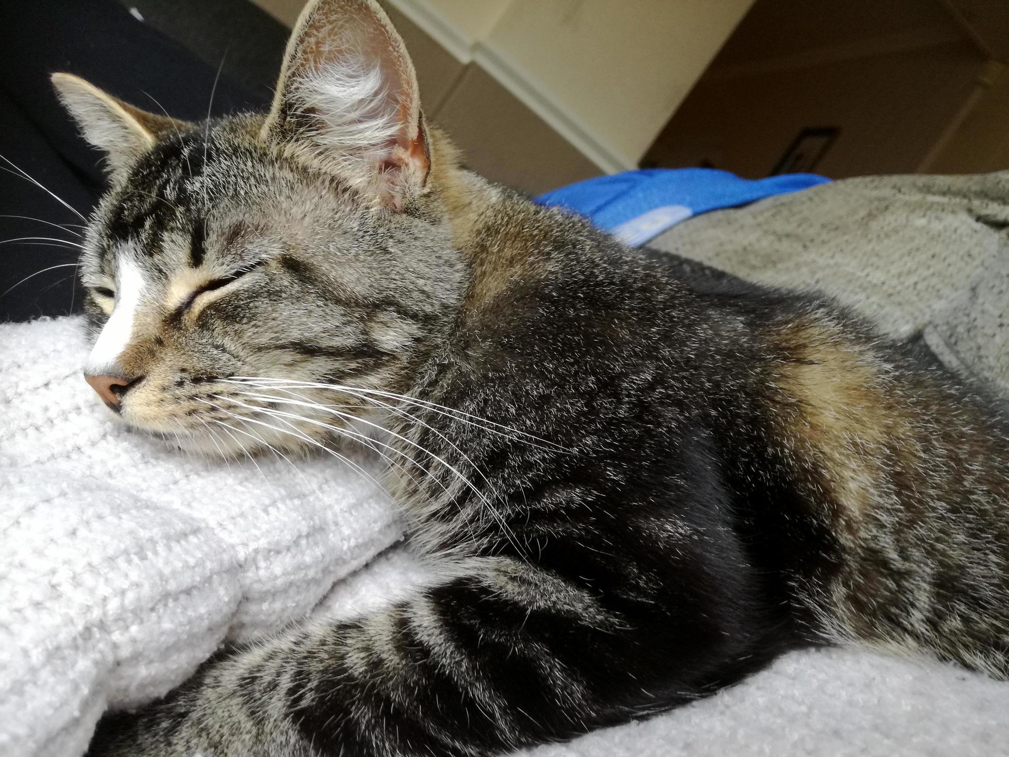 I woke up from my nap to find i had company!