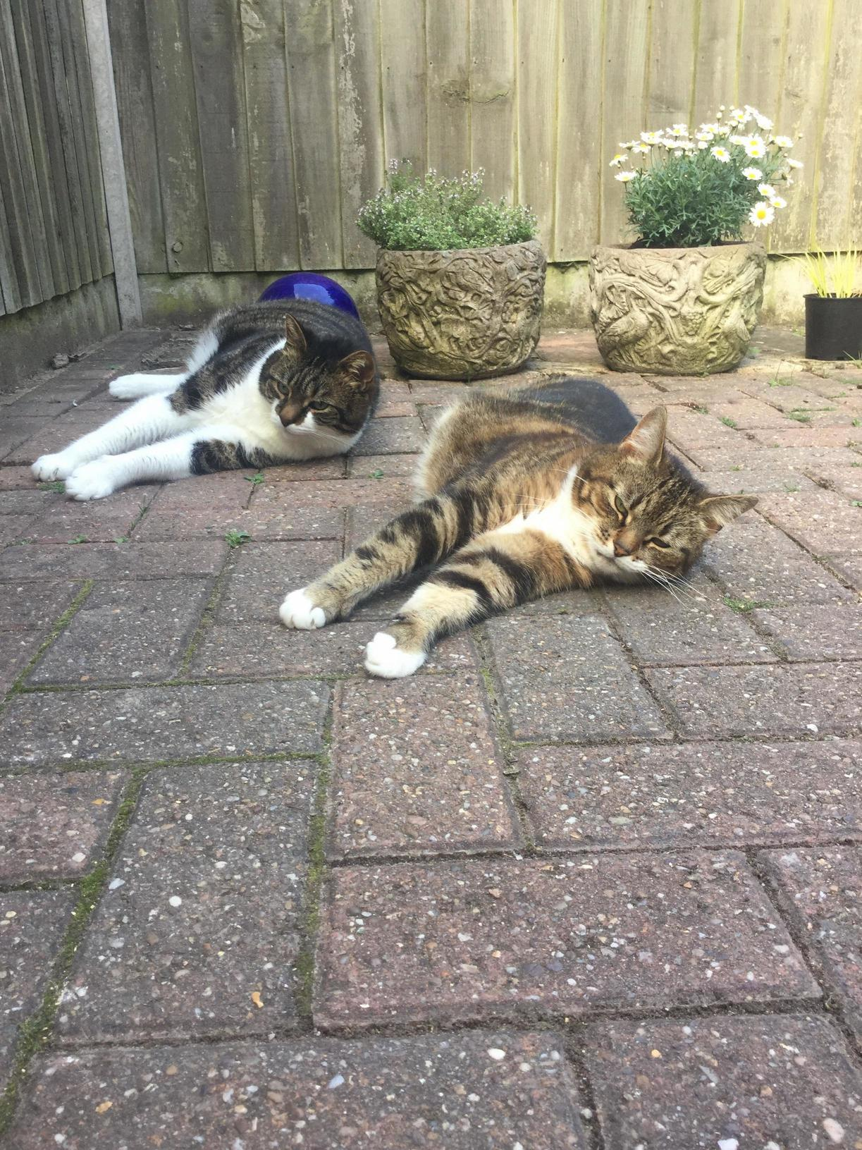 Little fluff balls chilling out after a hot, sunny day!