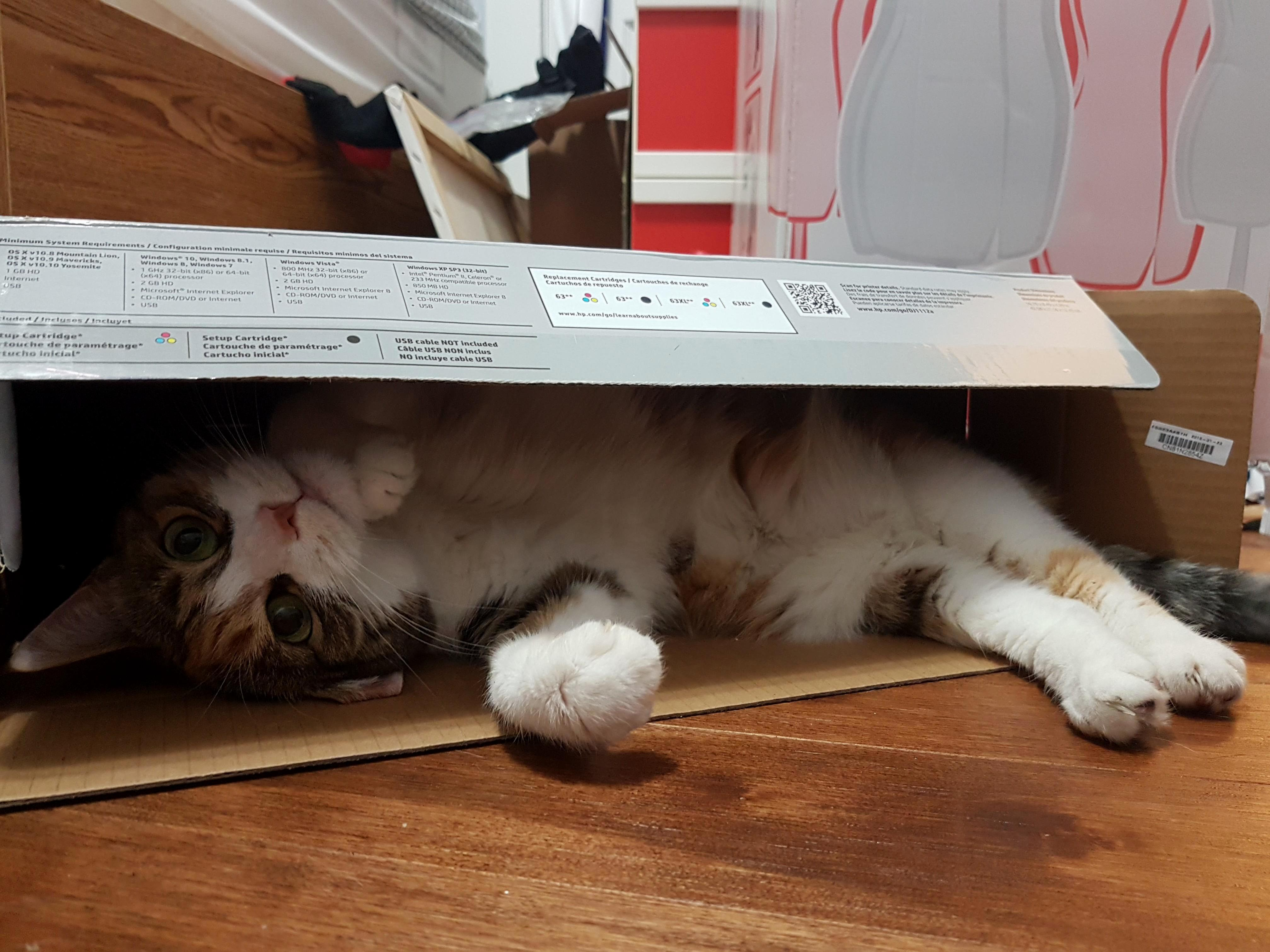 Making herself at home in my new printer box