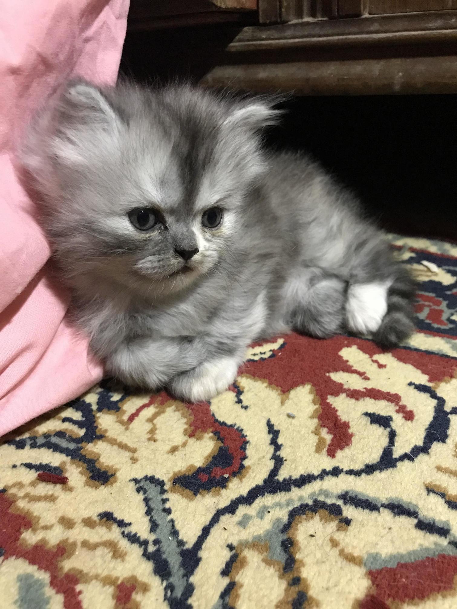 Meet litty , 2 months already 