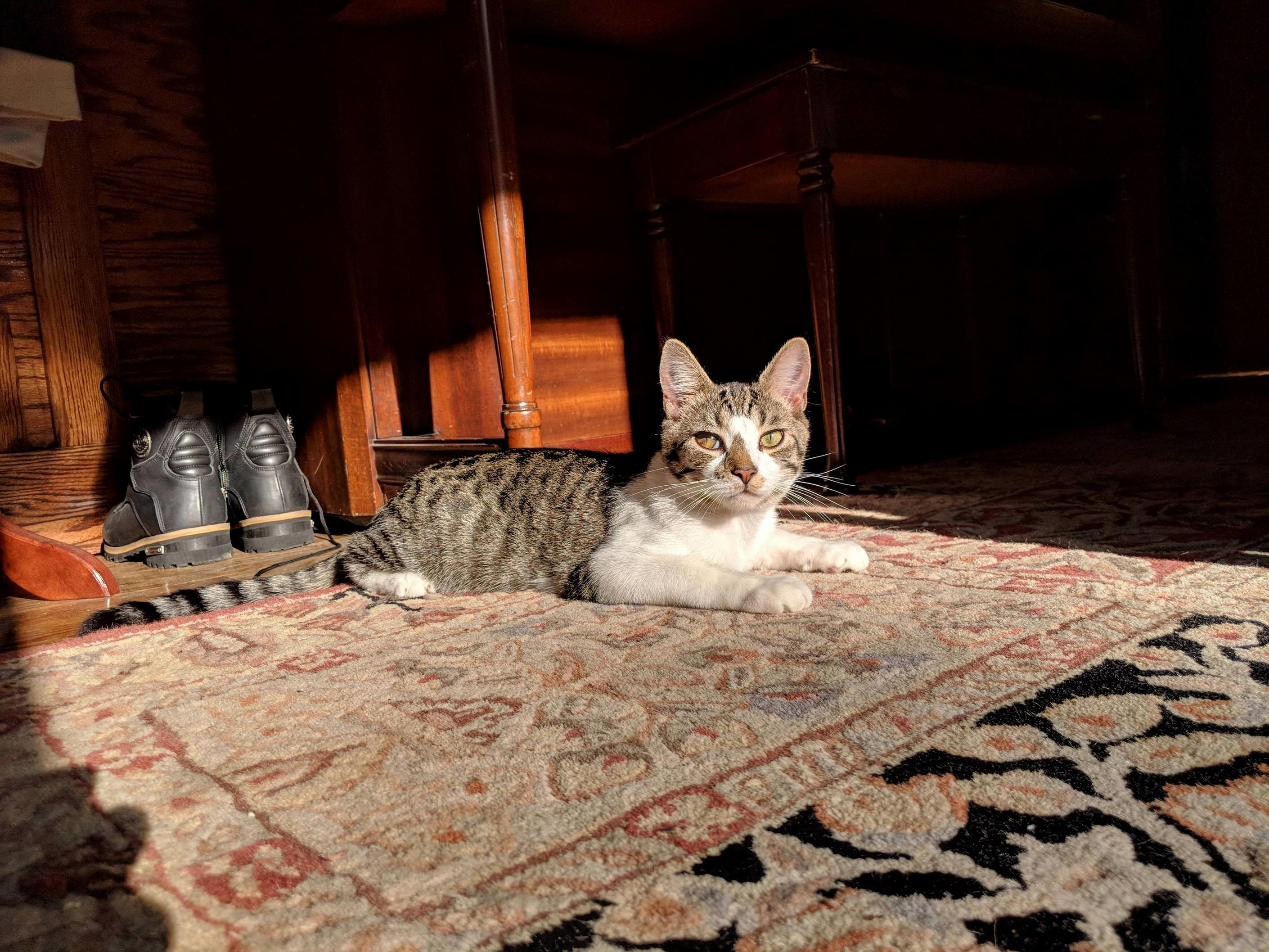 Mouse, soaking up the sun