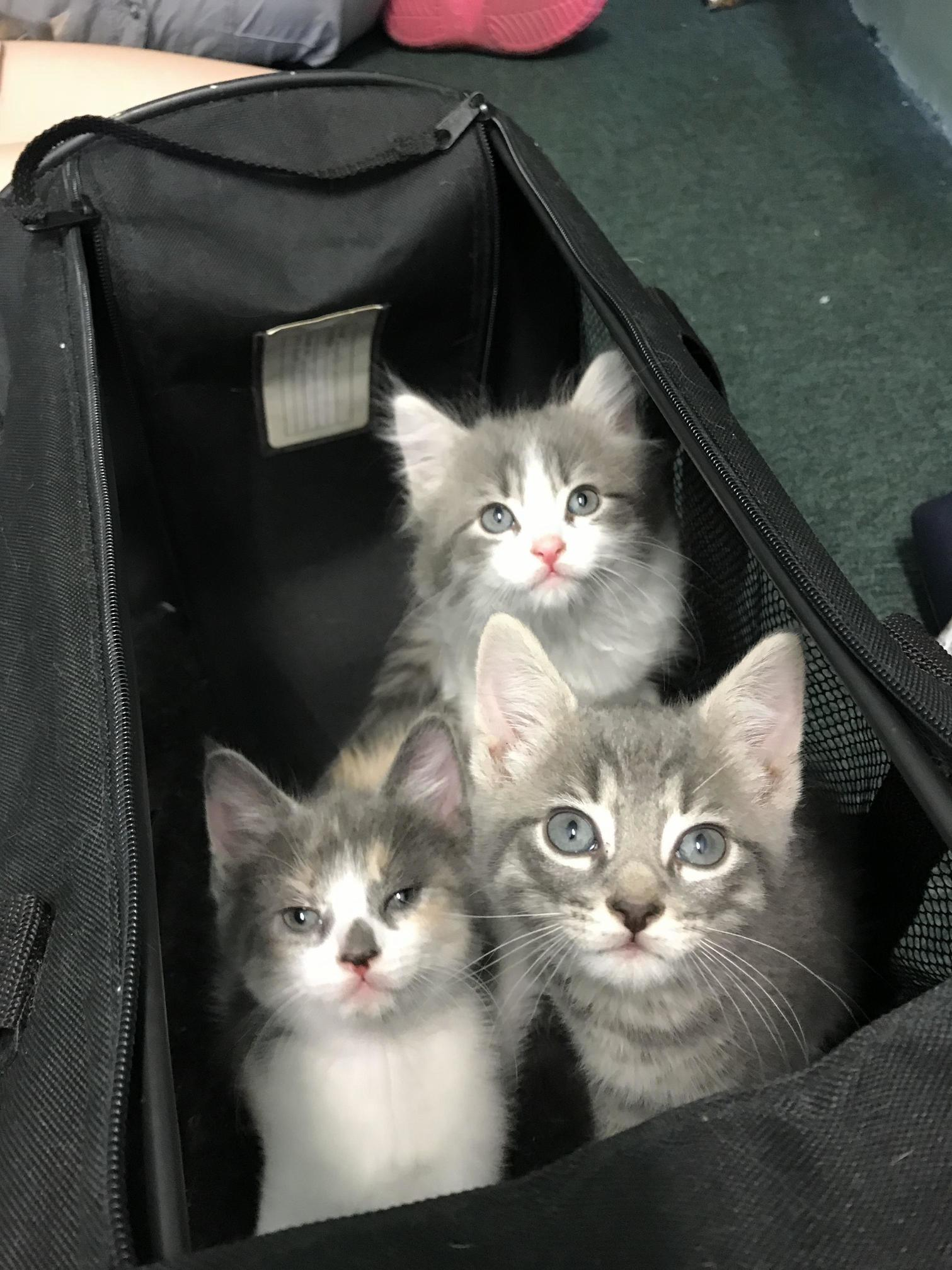 My friend is fostering some precious kittens