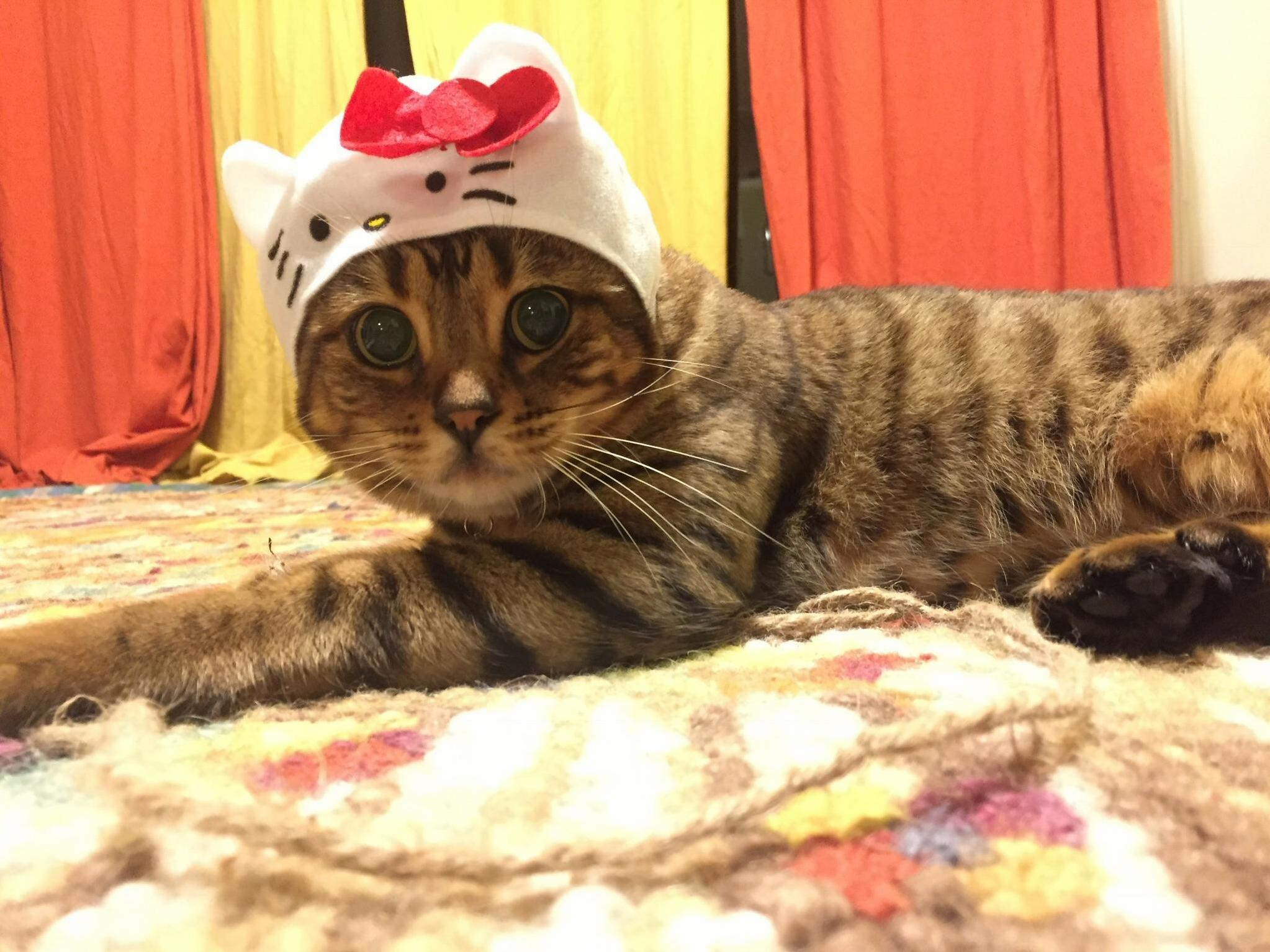 My friend traveled to japan and brought me back a few cat hats.. they did not disappoint. meet lil mama.