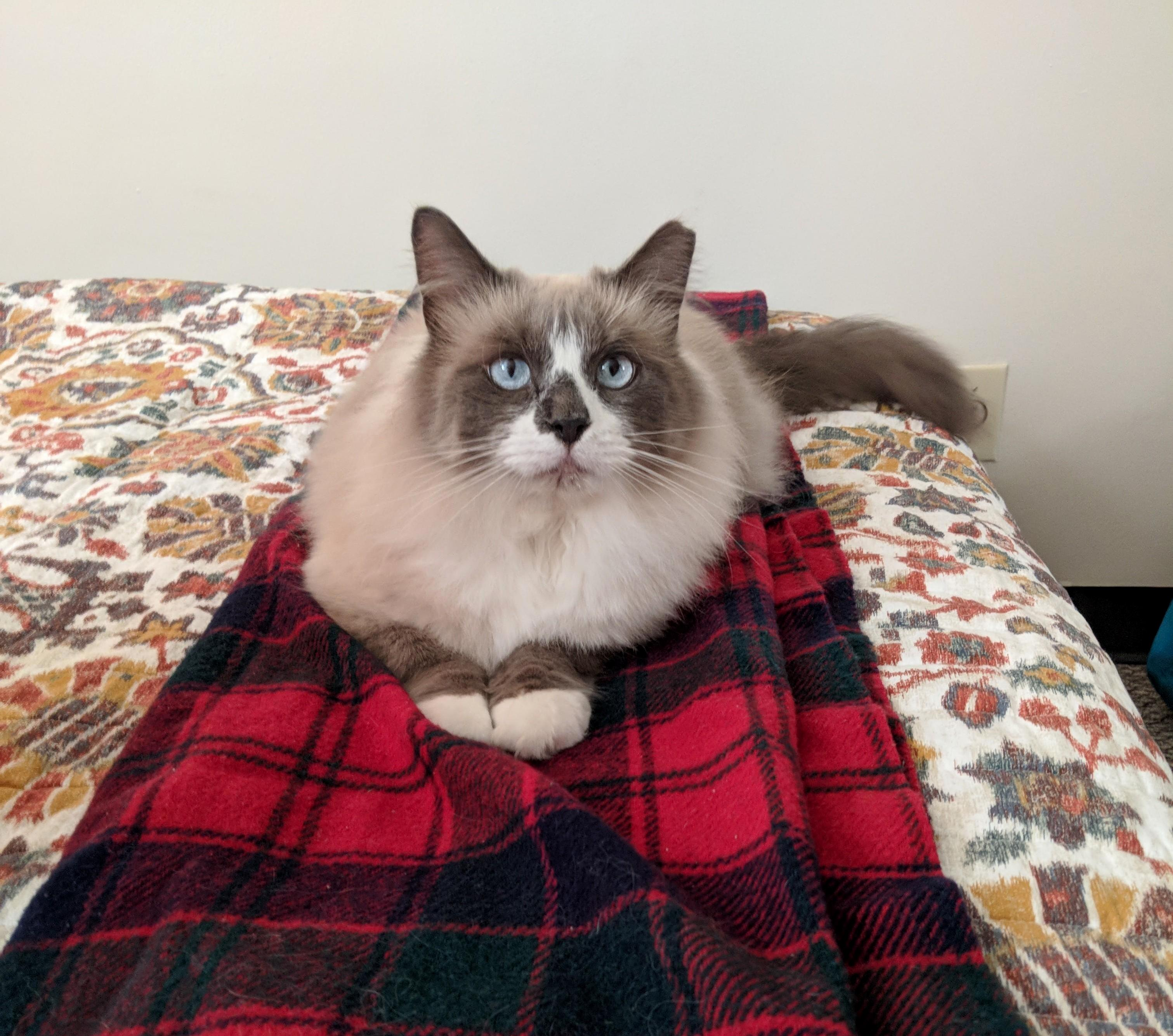 My prince on his favorite blanket